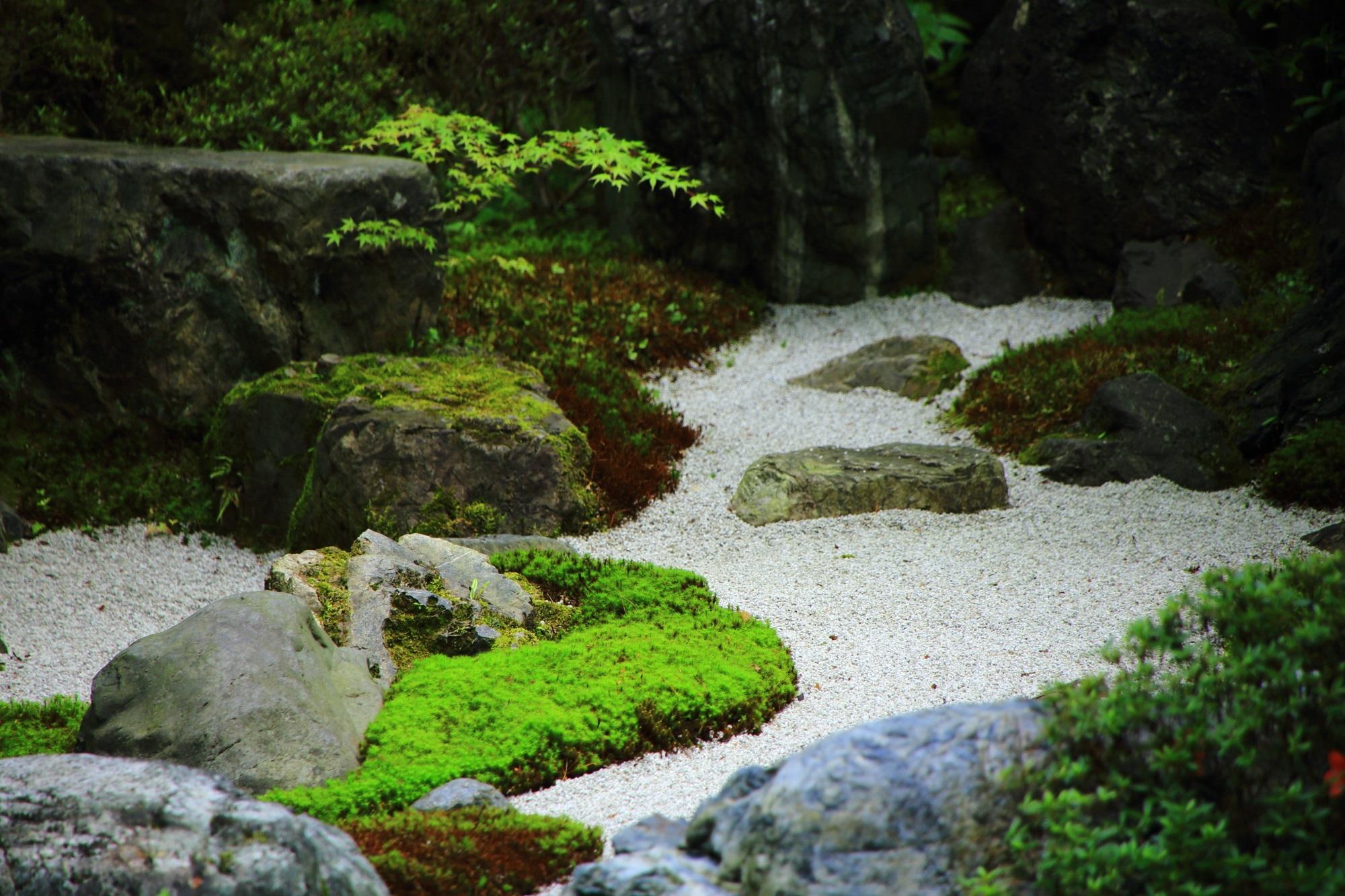 白砂 苔 方丈南庭 綺麗