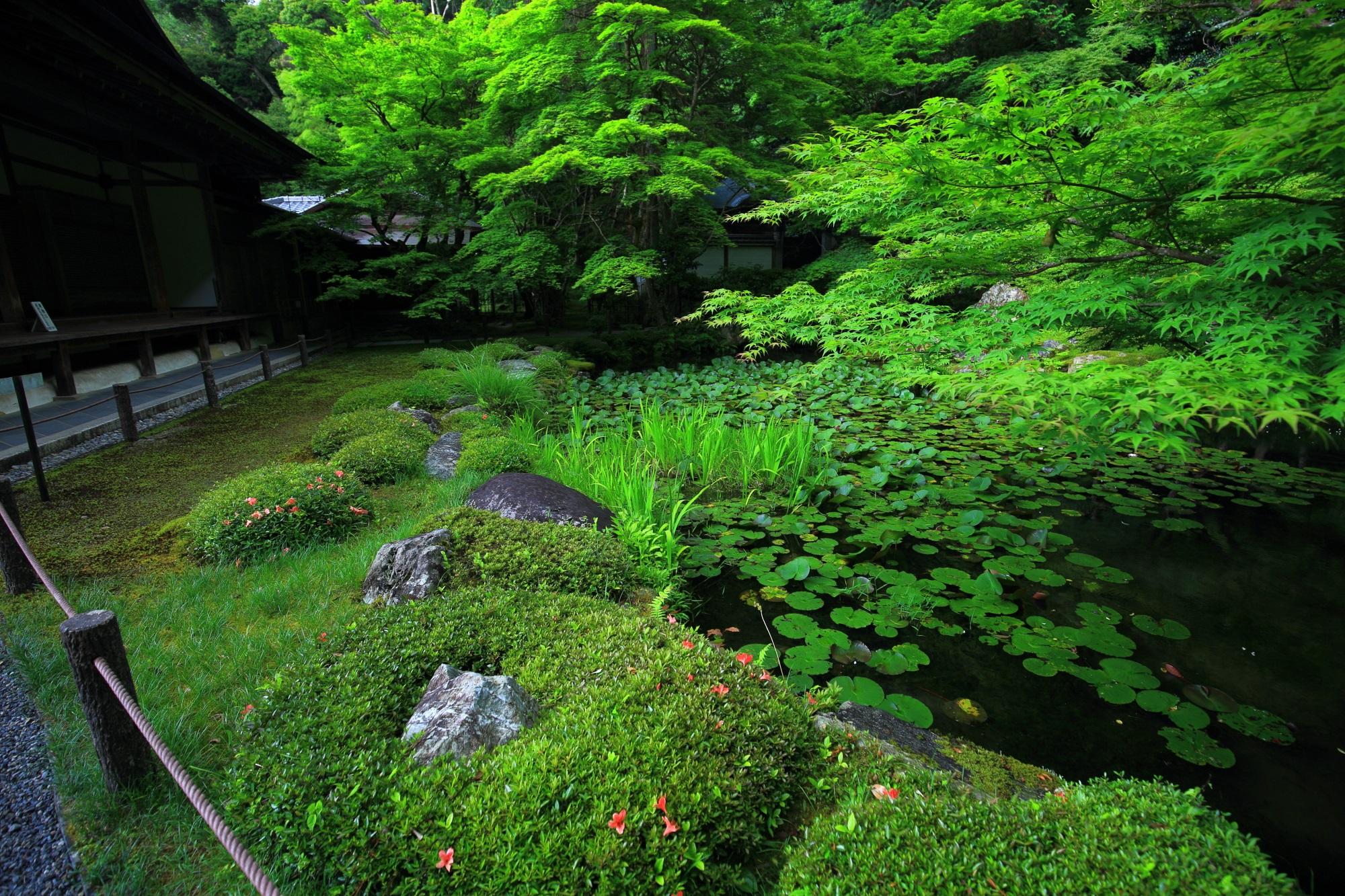 南禅院(なんぜんいん)の青もみじと池と方丈