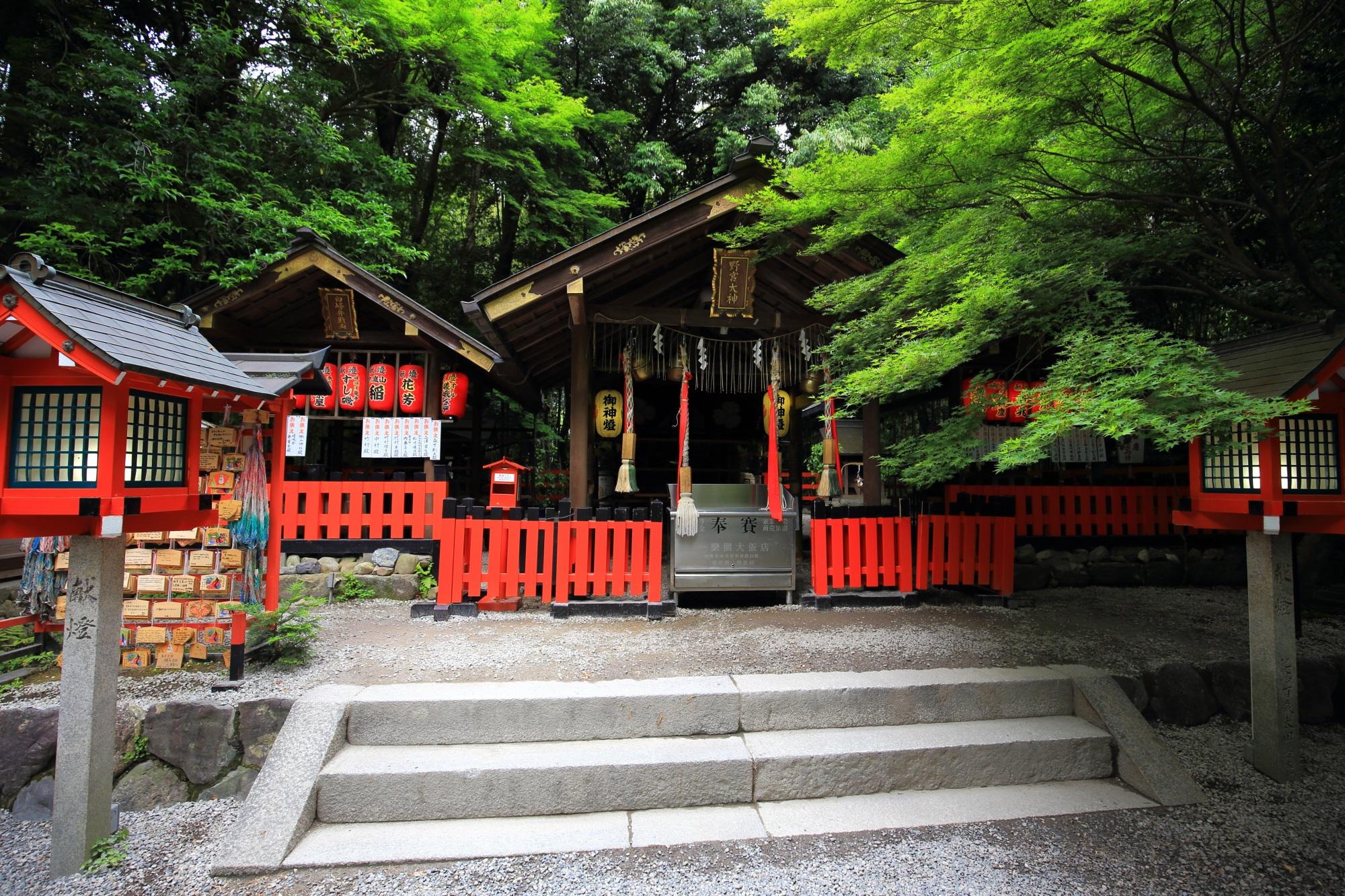 縁結びで知られる野宮神社(ののみやじんじゃ)の本殿と青もみじ