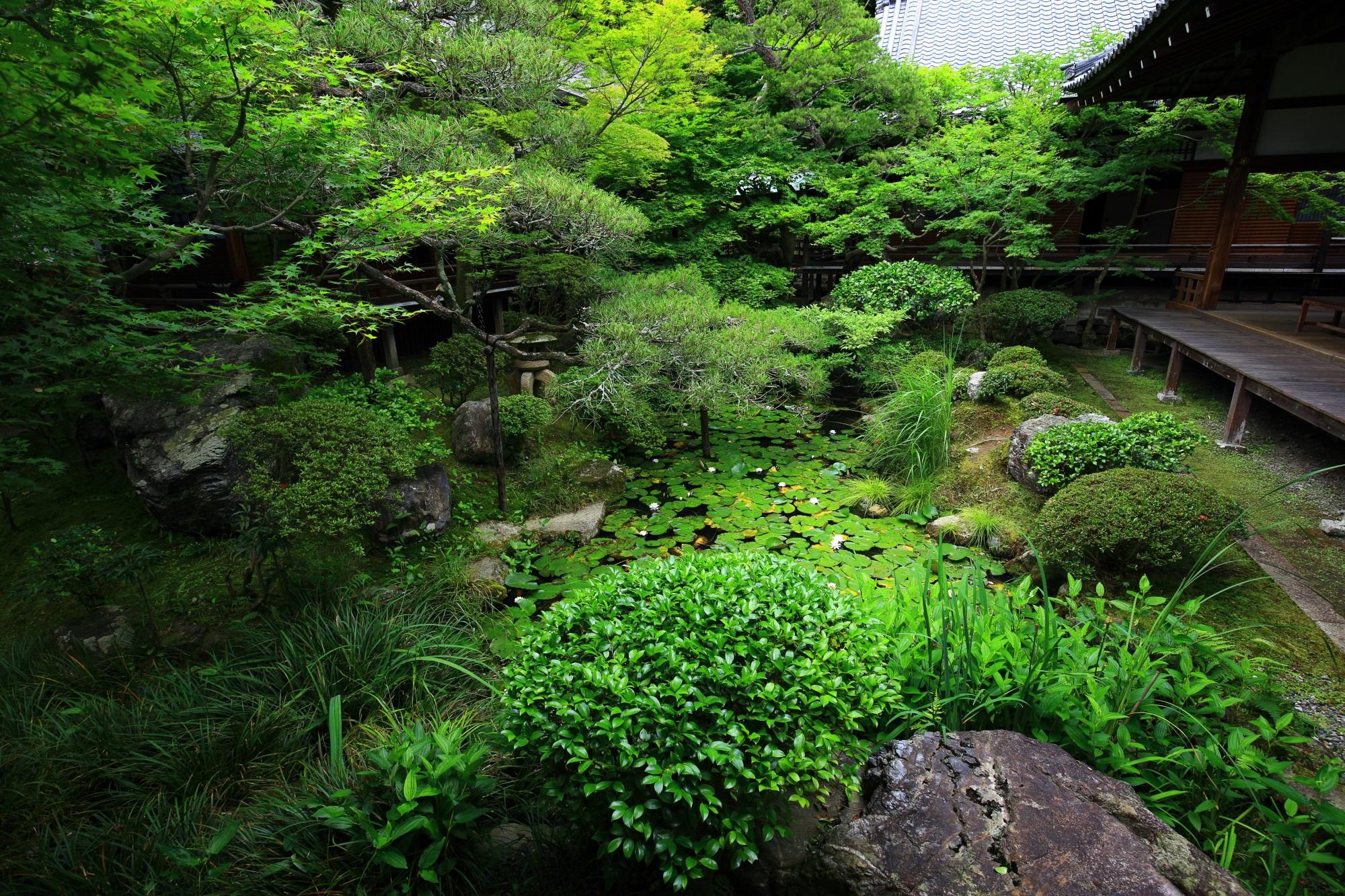 永観堂の池泉式庭園の方丈北庭