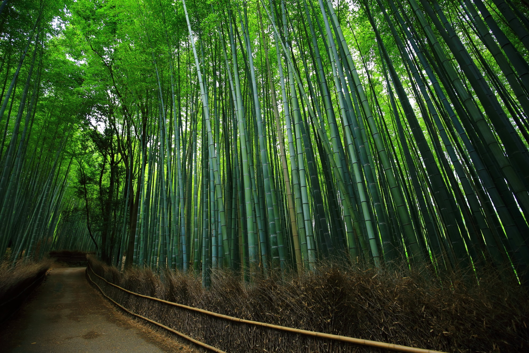 Kyoto Sagano Chikurin-no-michi Road of bamboo forest