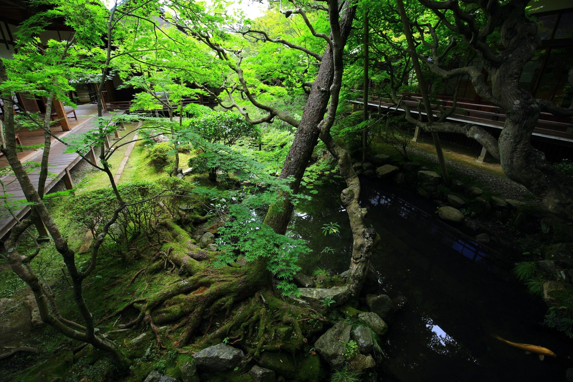 方丈庭園 池 新緑