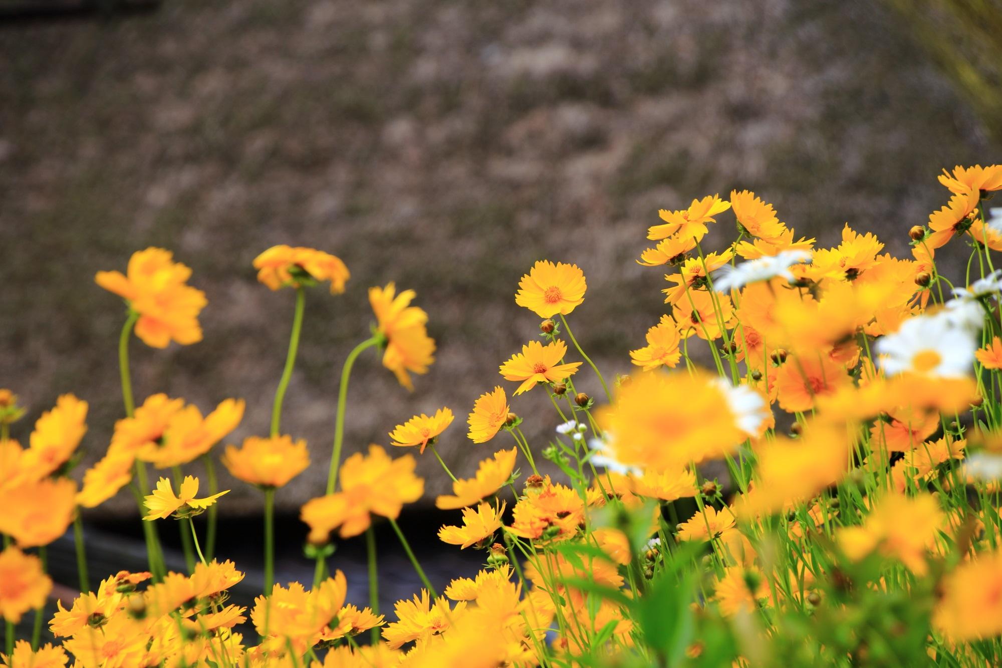 落ち着いた色合いのかやぶき屋根を彩る綺麗な花