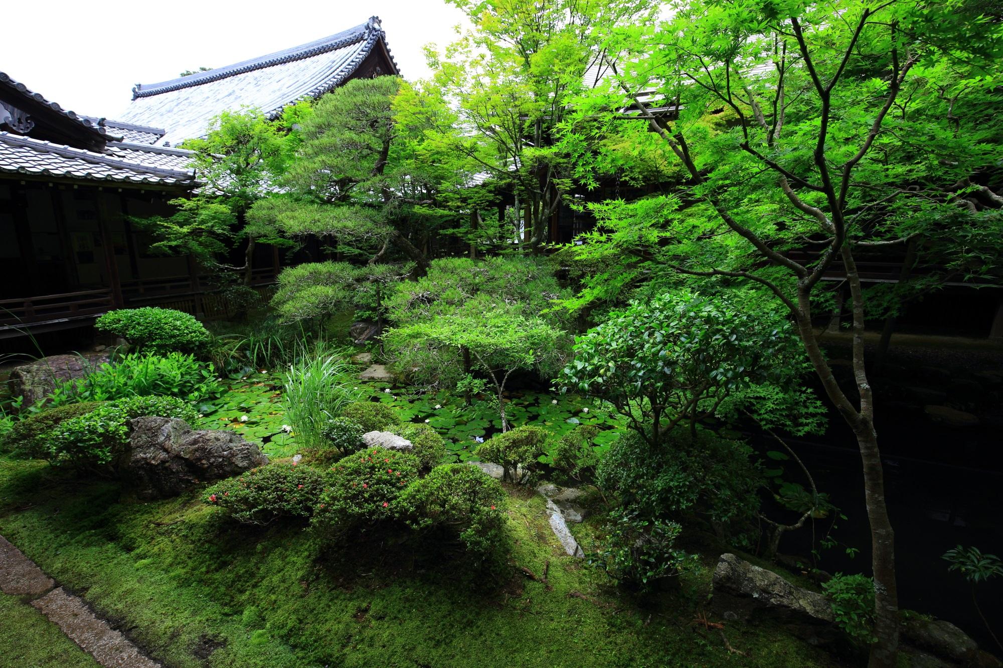 緑の美しい方丈北庭