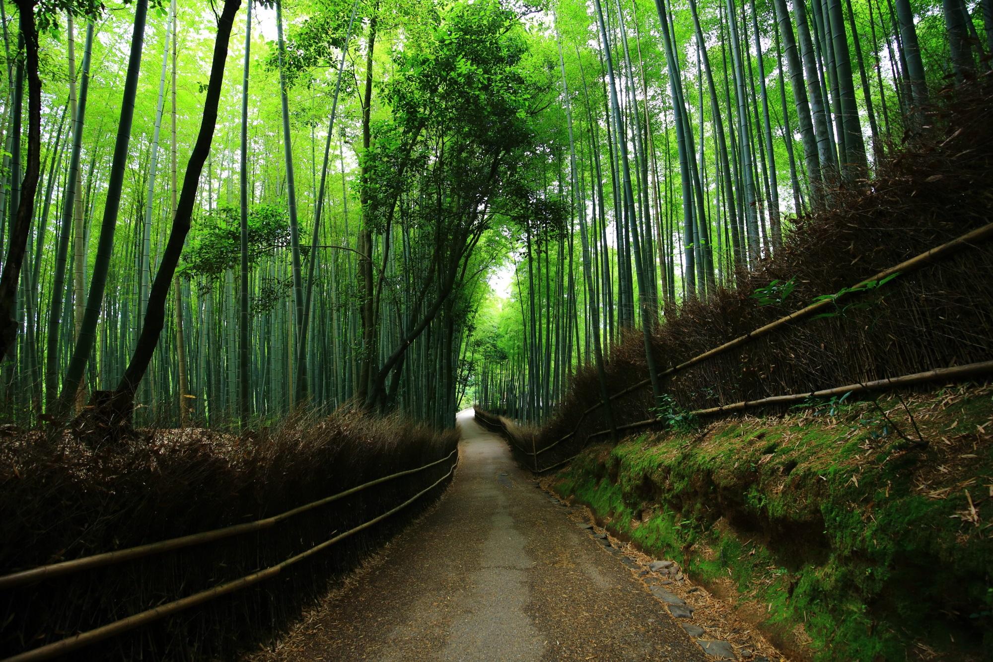 竹の画像 p1_12
