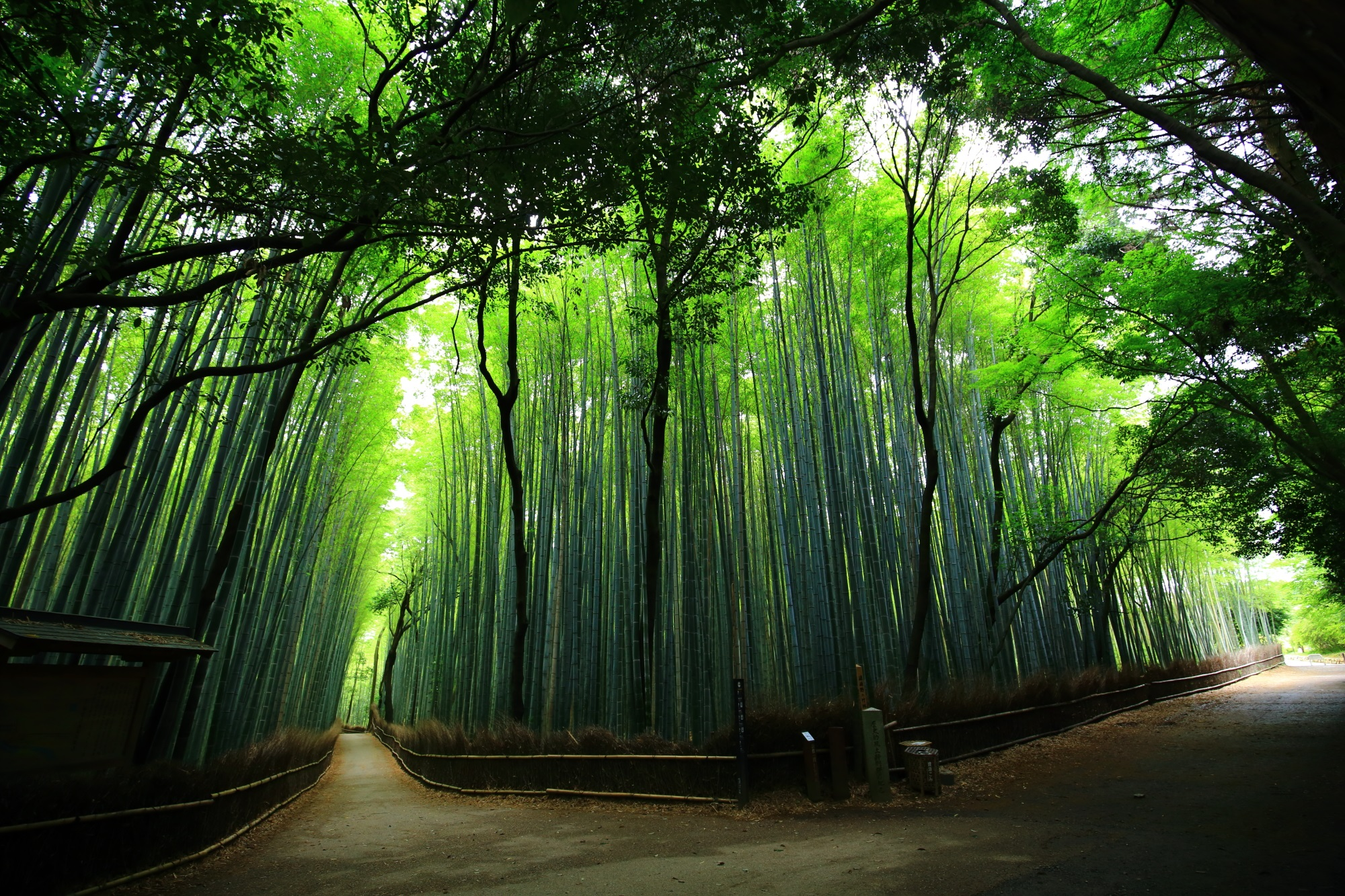 Road of bamboo forest inKyoto Japan