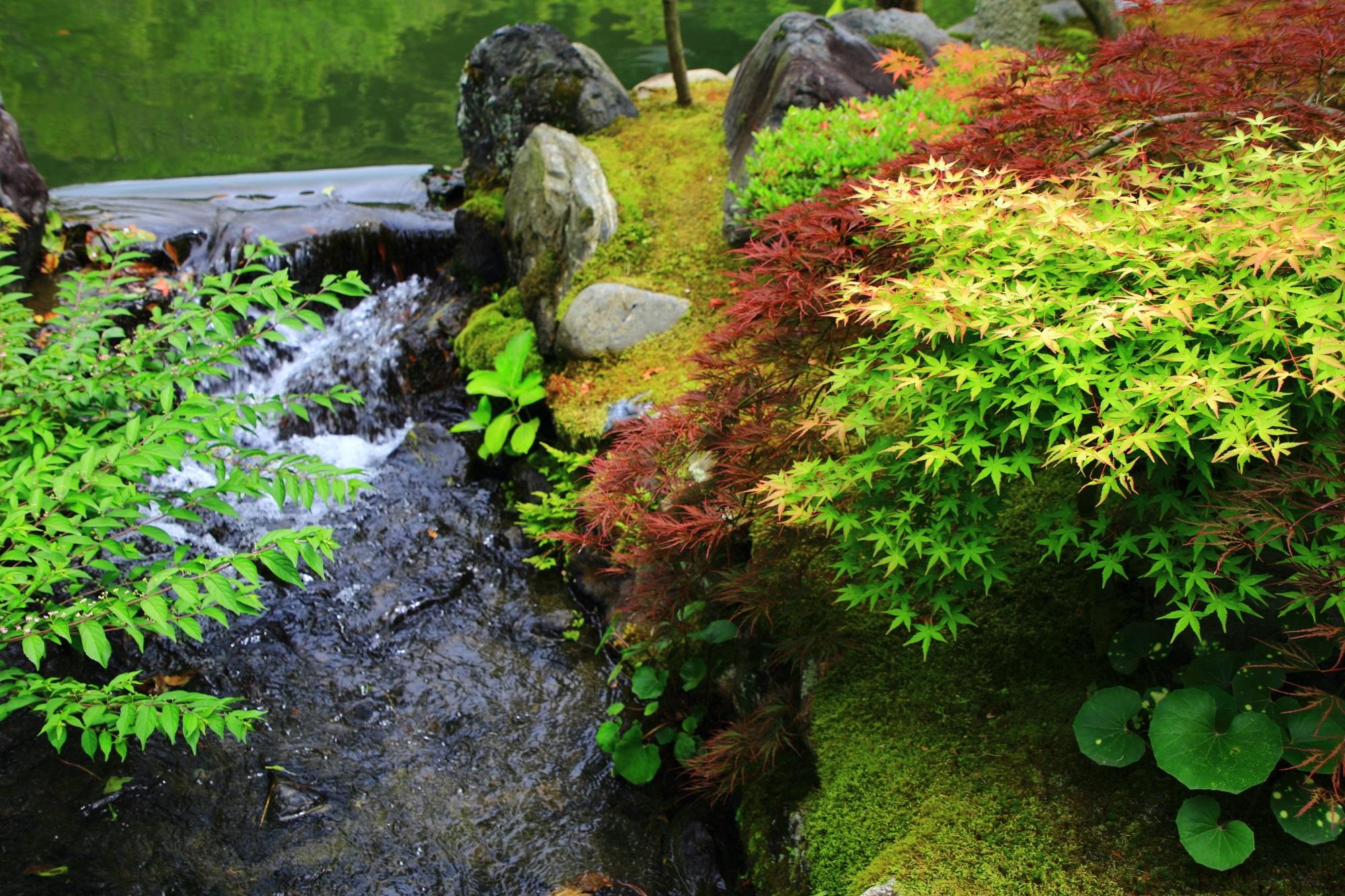 永観堂(禅林寺)の素晴らしい新緑