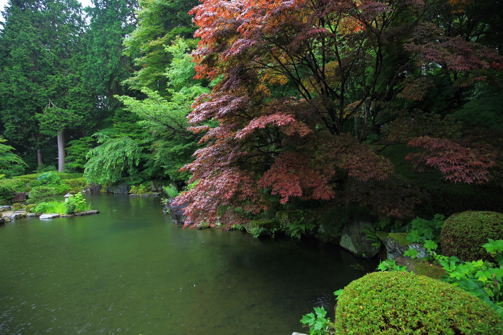 善峯寺の蓮華寿院旧跡庭の溢れるような綺麗なもみじ