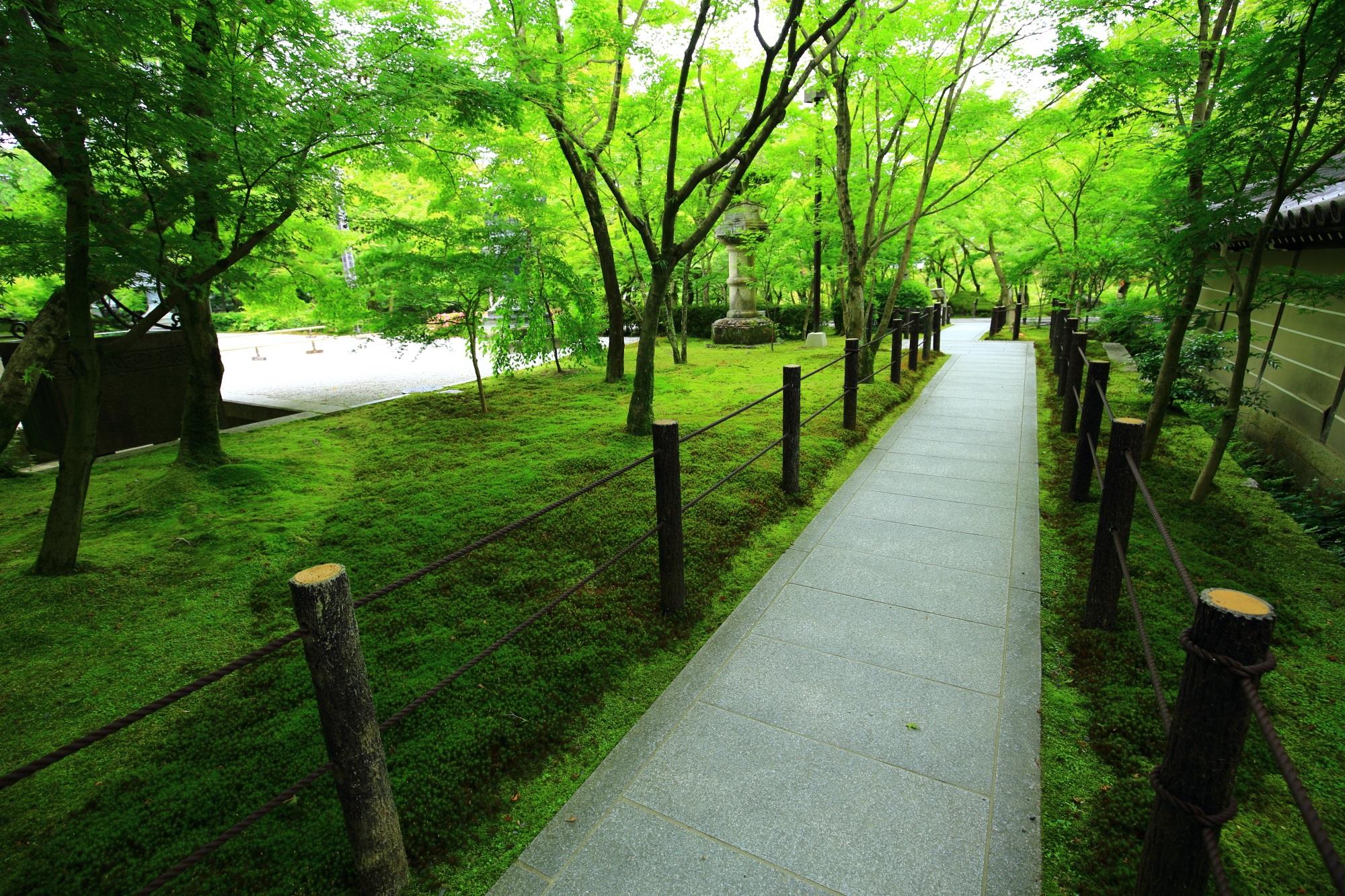 もみじの名所の永観堂の美しい緑の苔