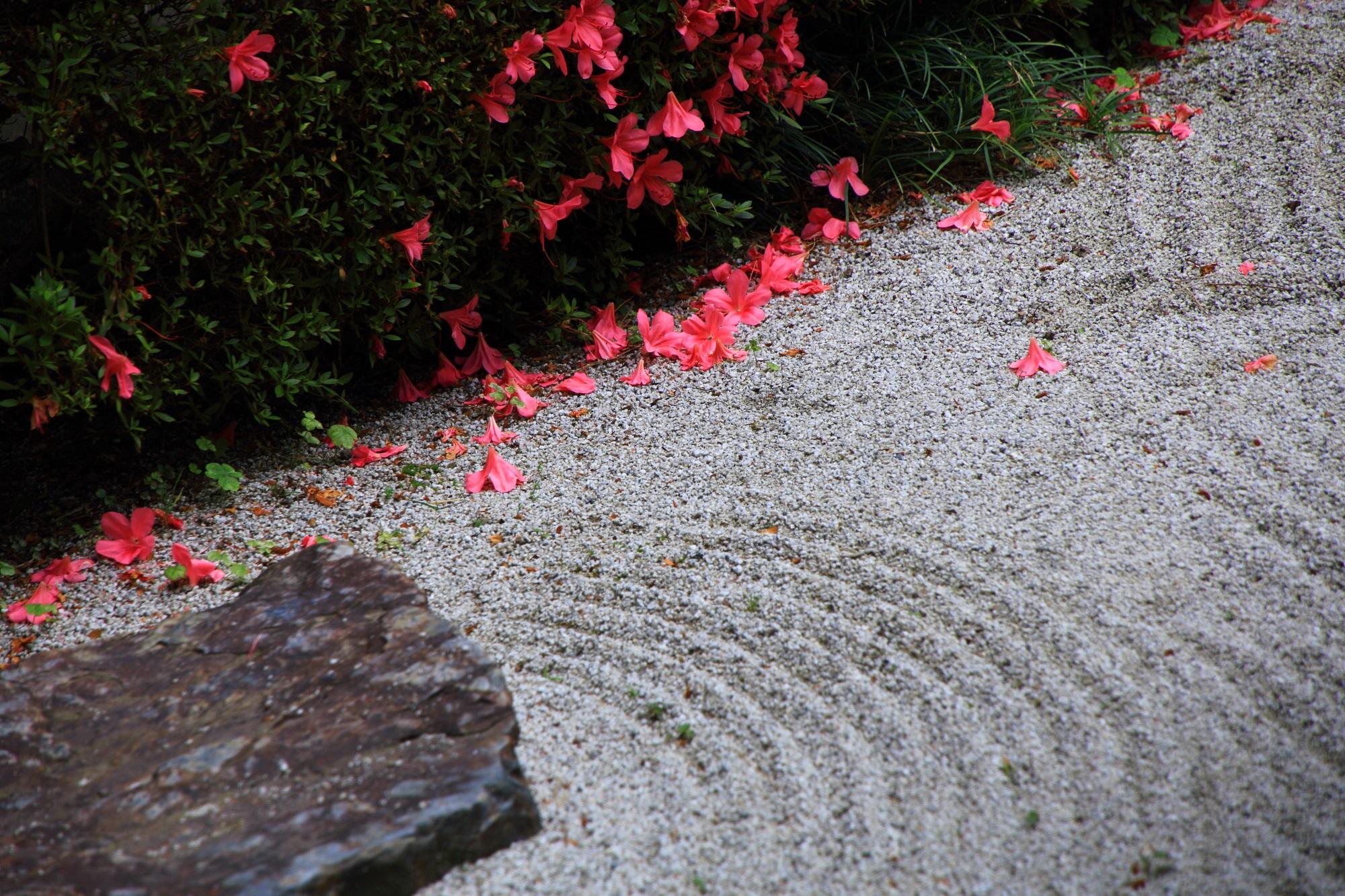 白砂 サツキ 方丈庭園 華やか