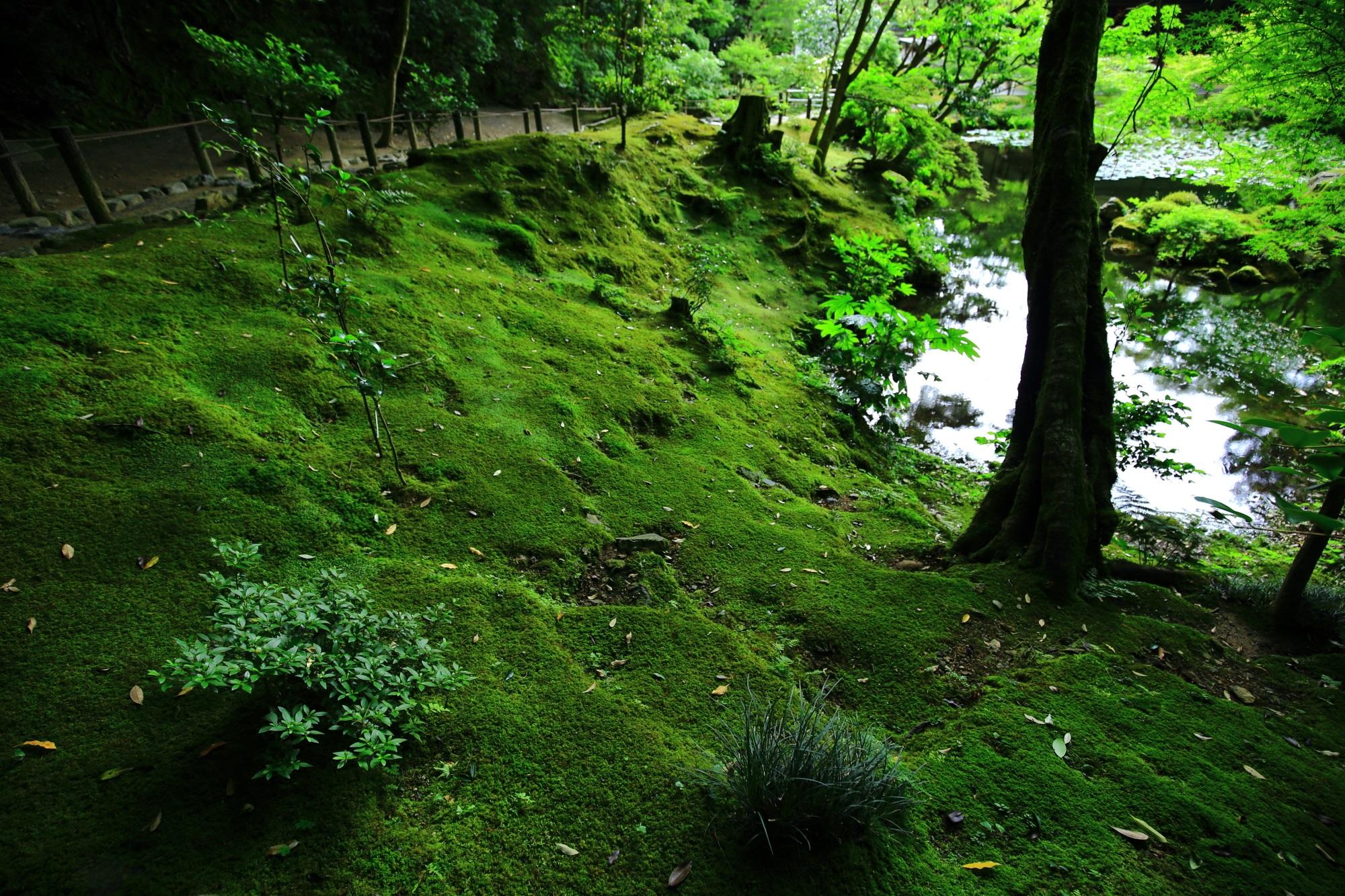 苔 南禅院 緑 風情