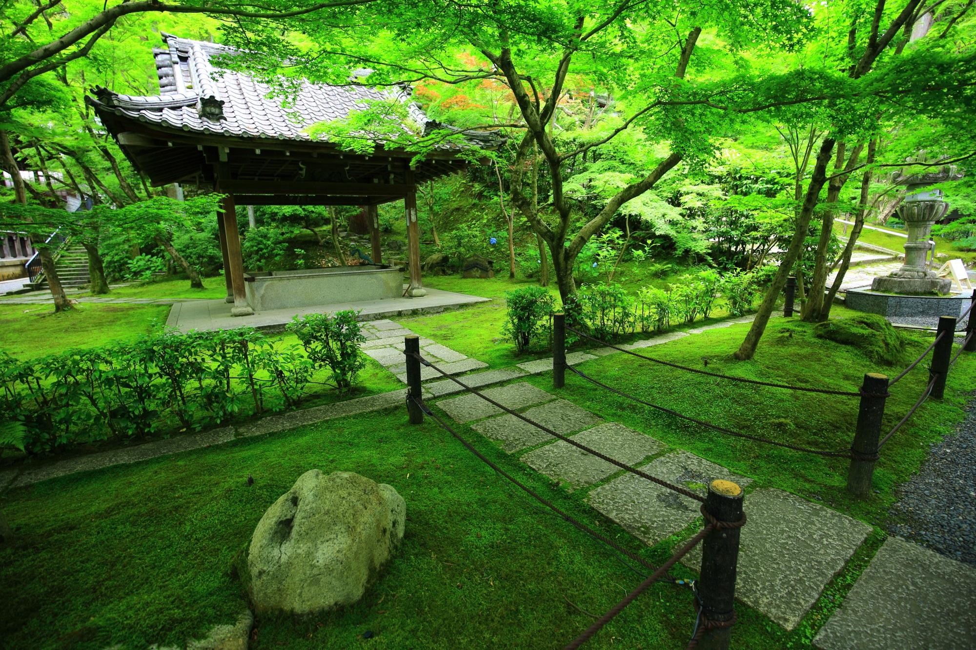 永観堂の手水舎と美しい緑の苔ともみじ