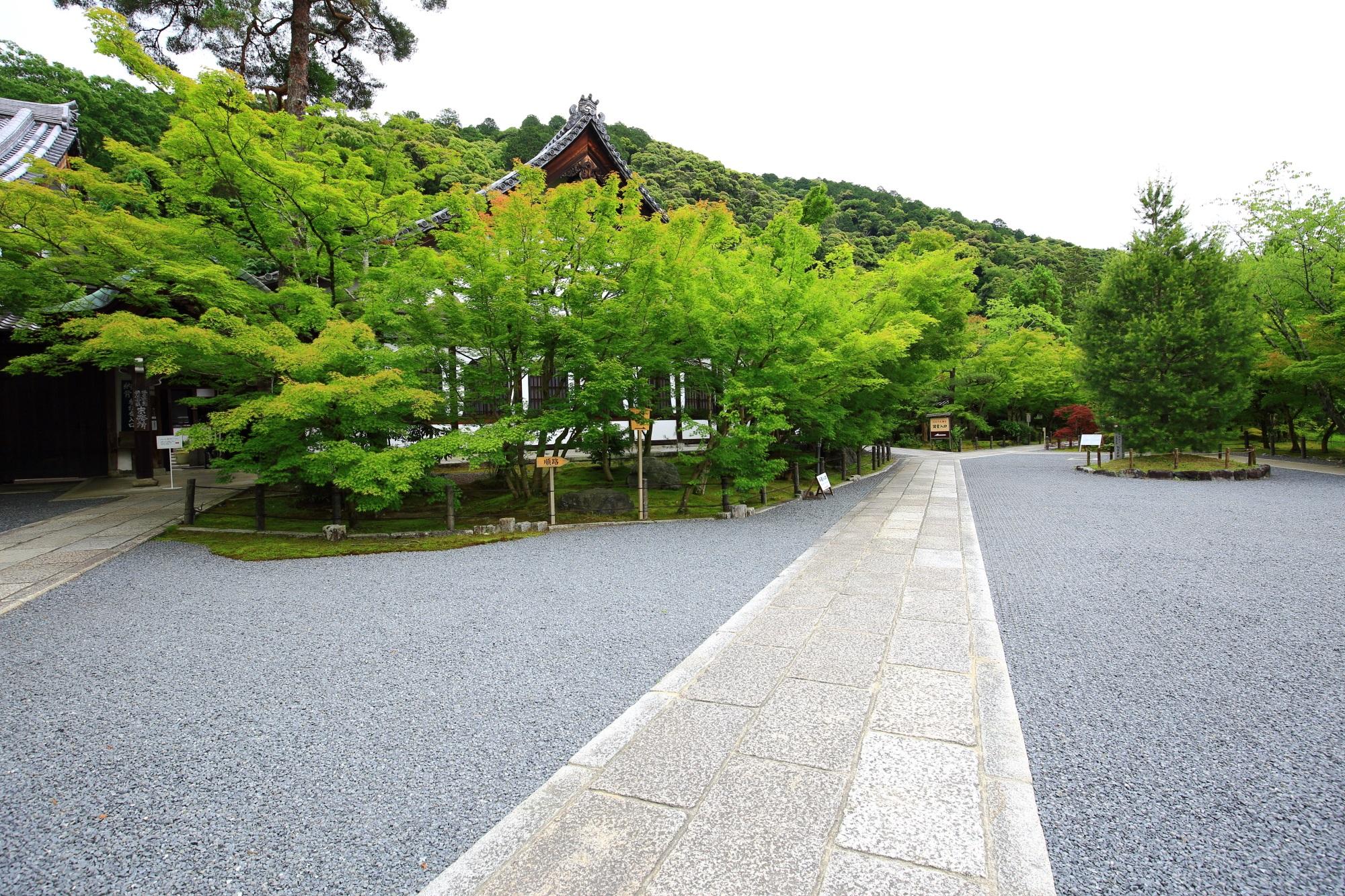 永観堂の鶴寿台と見事な青もみじ