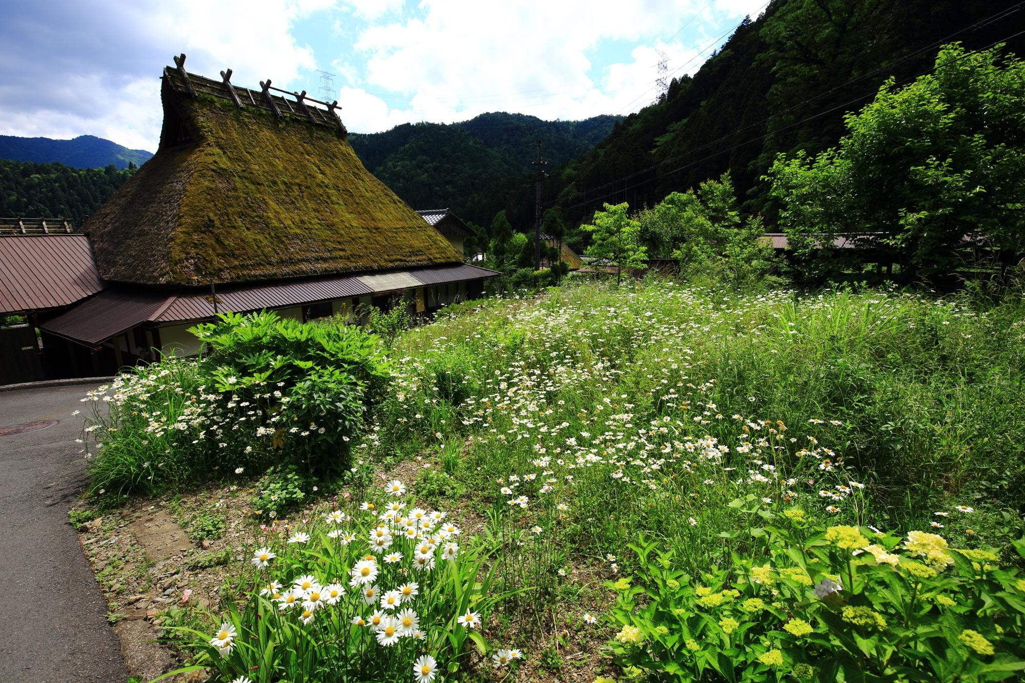 京都府も町も観光化を進めている普通に人が住むかやぶきの里
