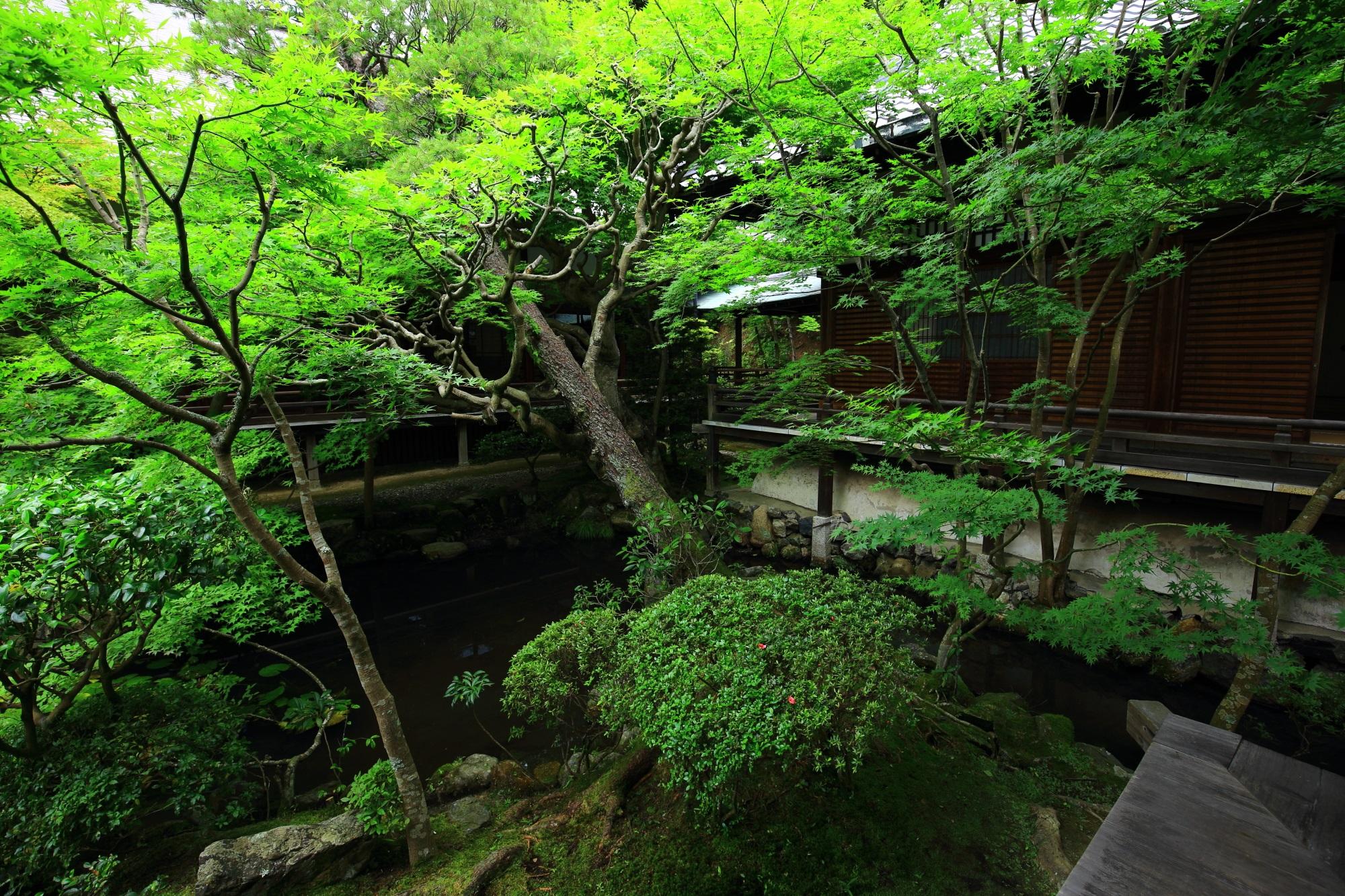 深い緑につつまれた永観堂の方丈庭園