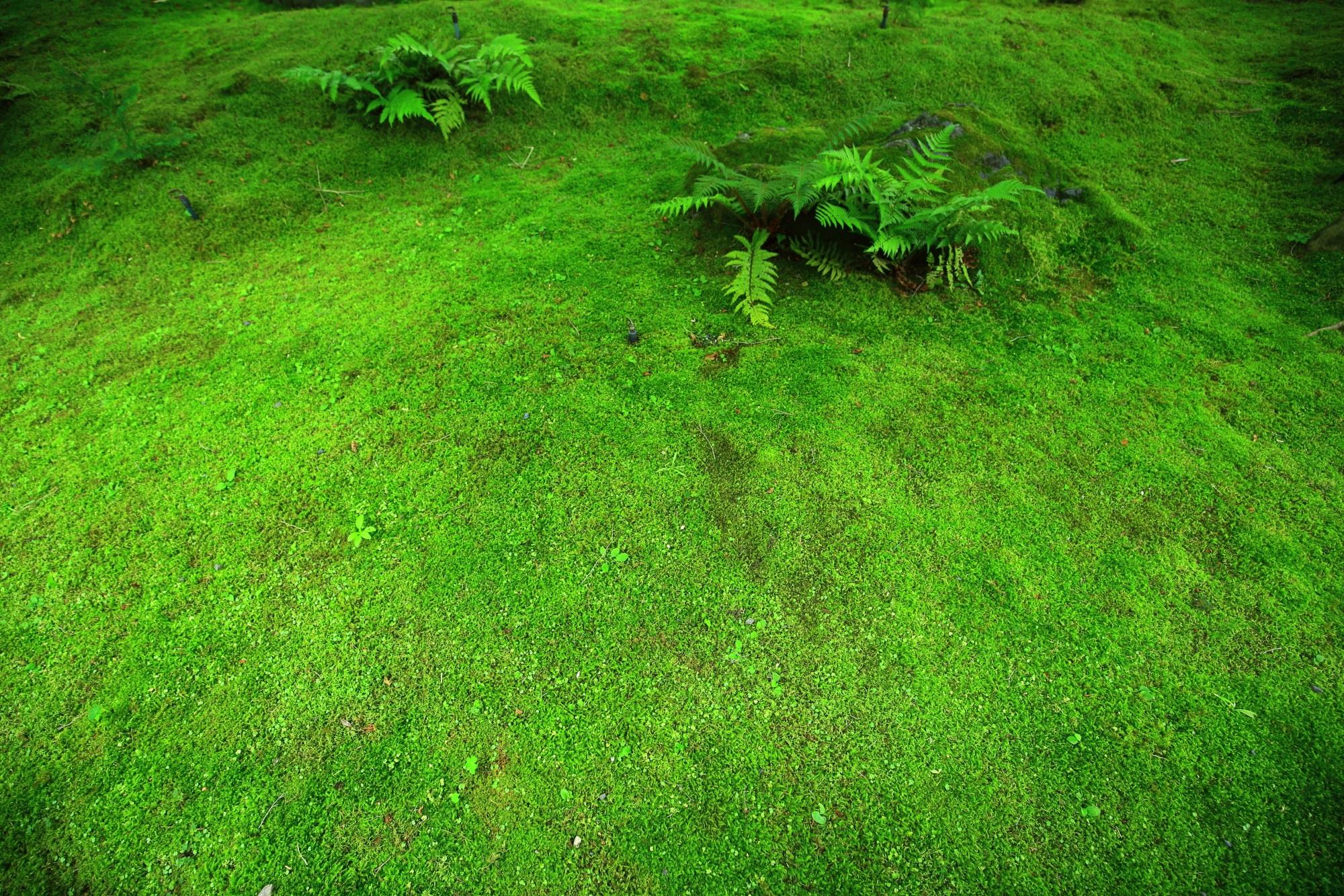 高画質 永観堂 写真 苔 緑 綺麗