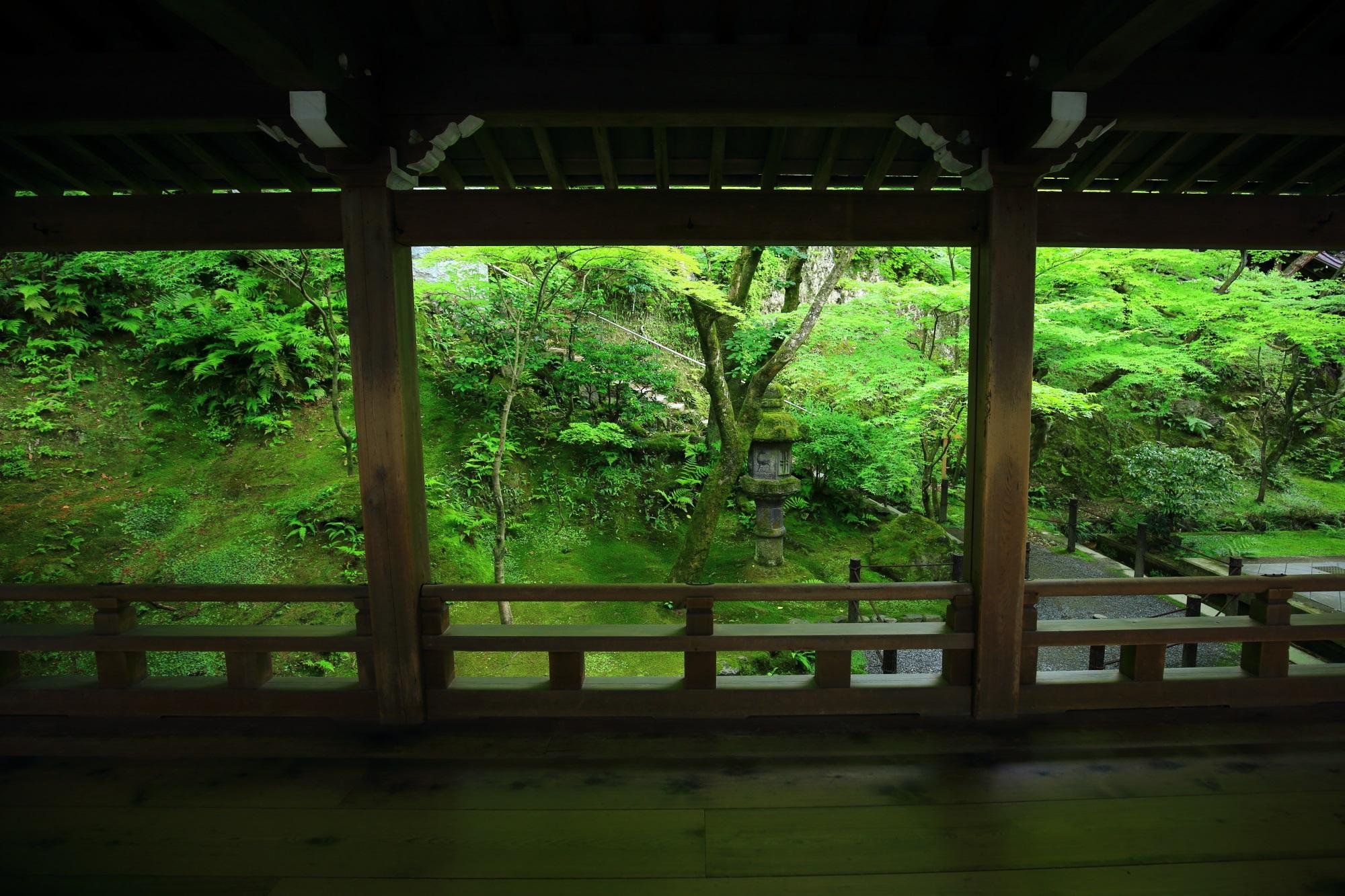 永観堂の渡廊下から眺めた緑の苔と青もみじ