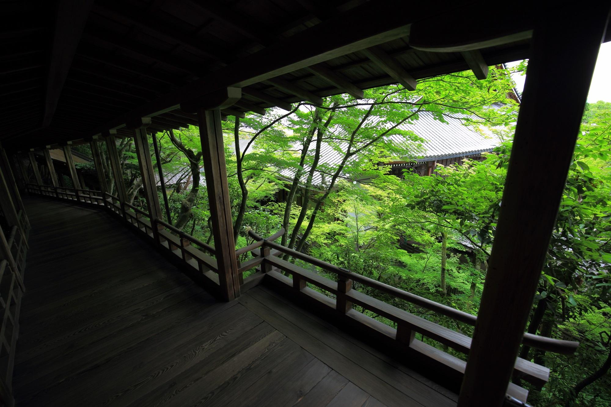 もみじの名所の永観堂の回廊から眺めた新緑