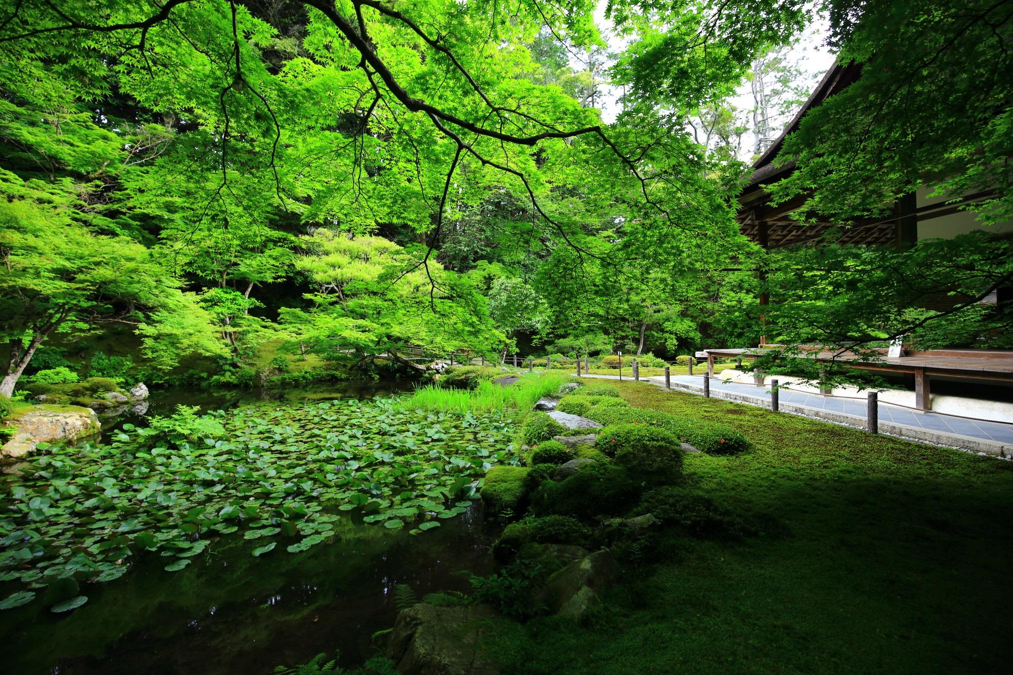 南禅寺別院の南禅院の鮮やかな青もみじと池