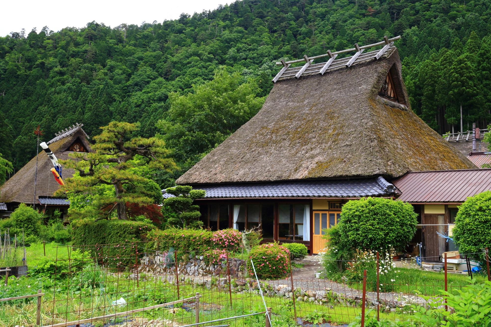 たくさんある見事な茅葺き屋根の家