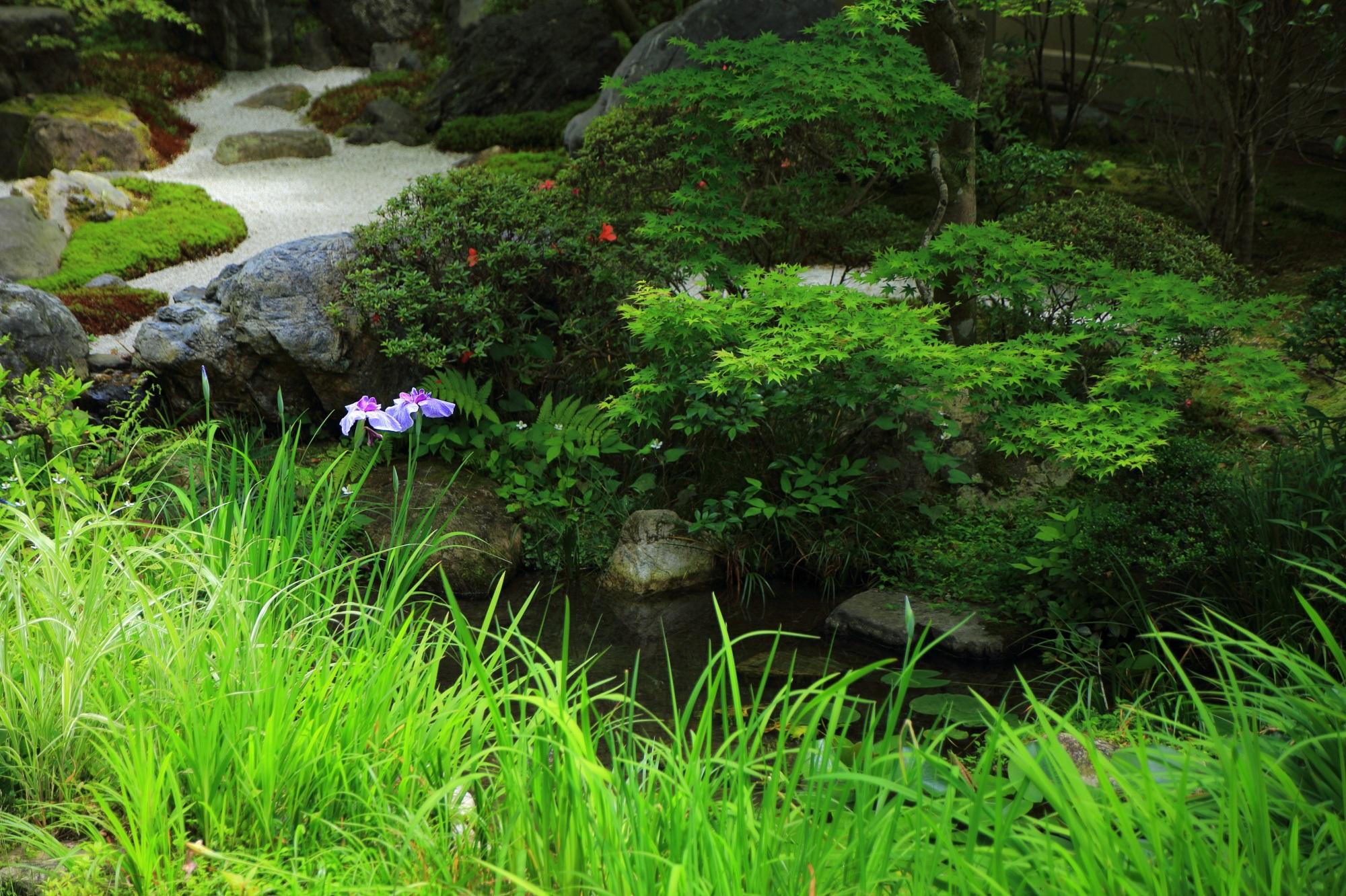 方丈庭園の華やかな緑