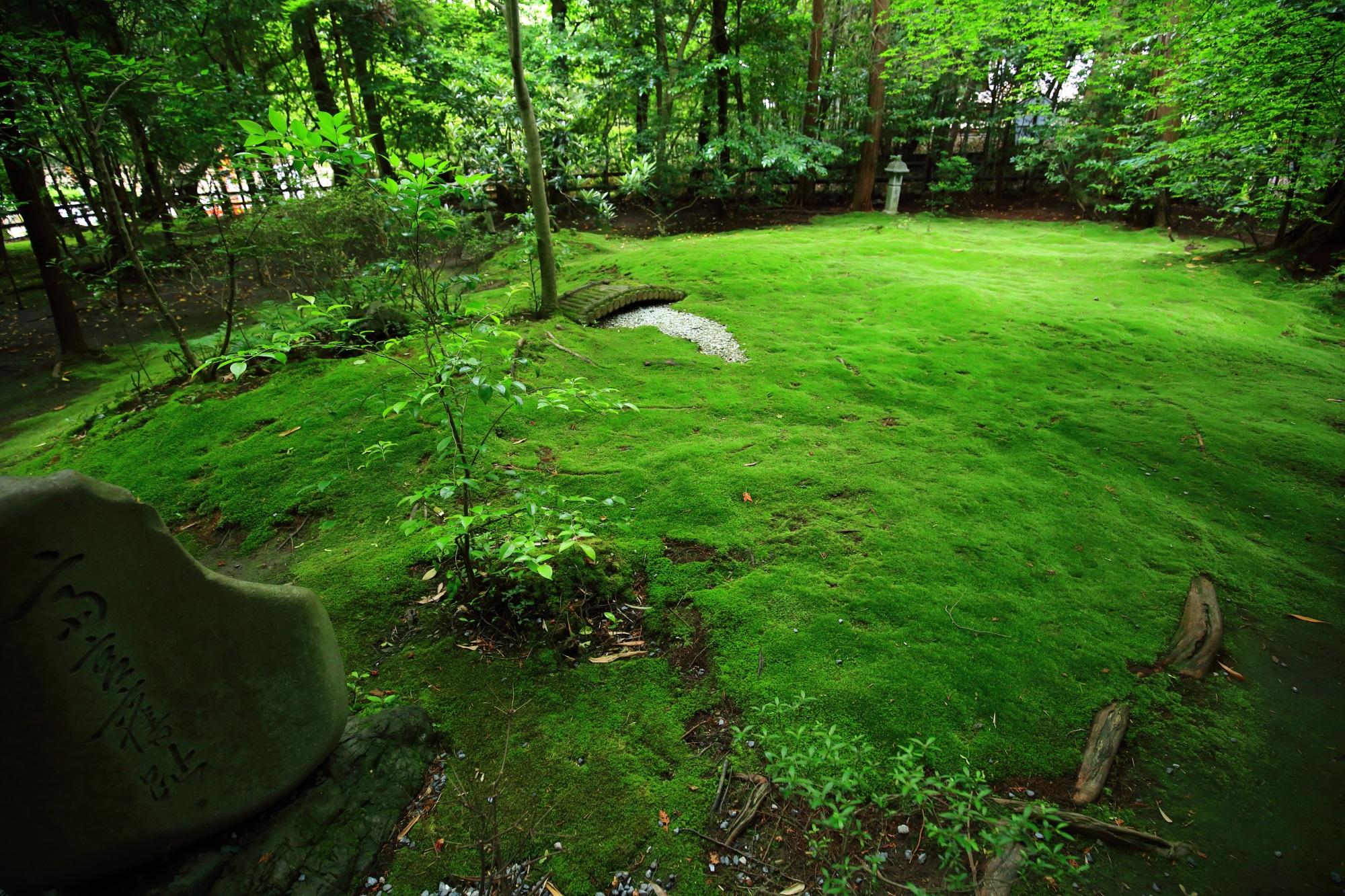 苔庭 野宮神社 緑 綺麗 京都