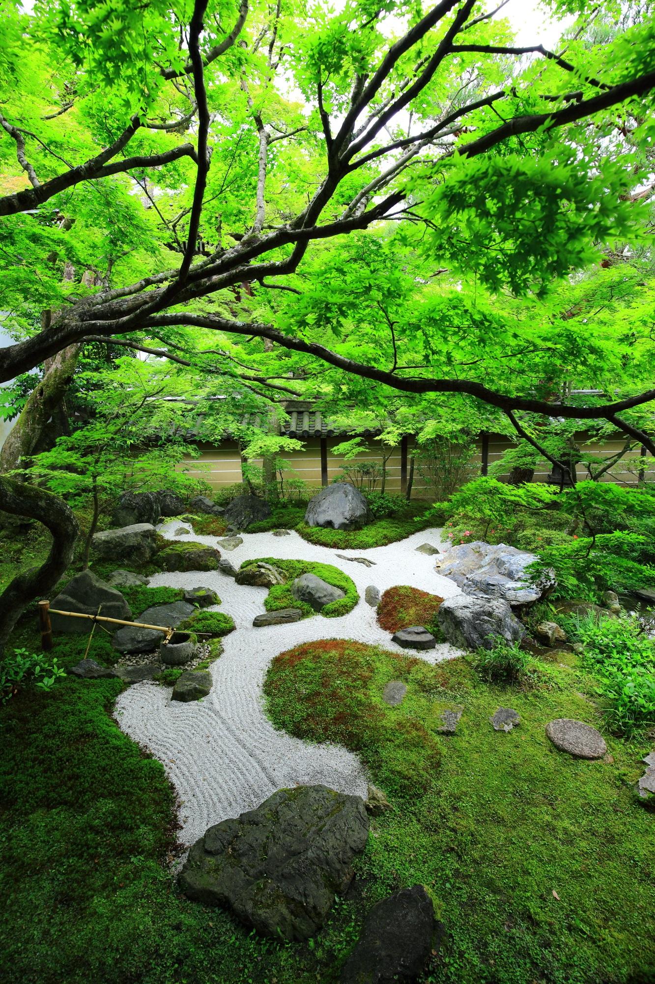 鮮やかな緑につつまれたもみじの名所の永観堂の中庭