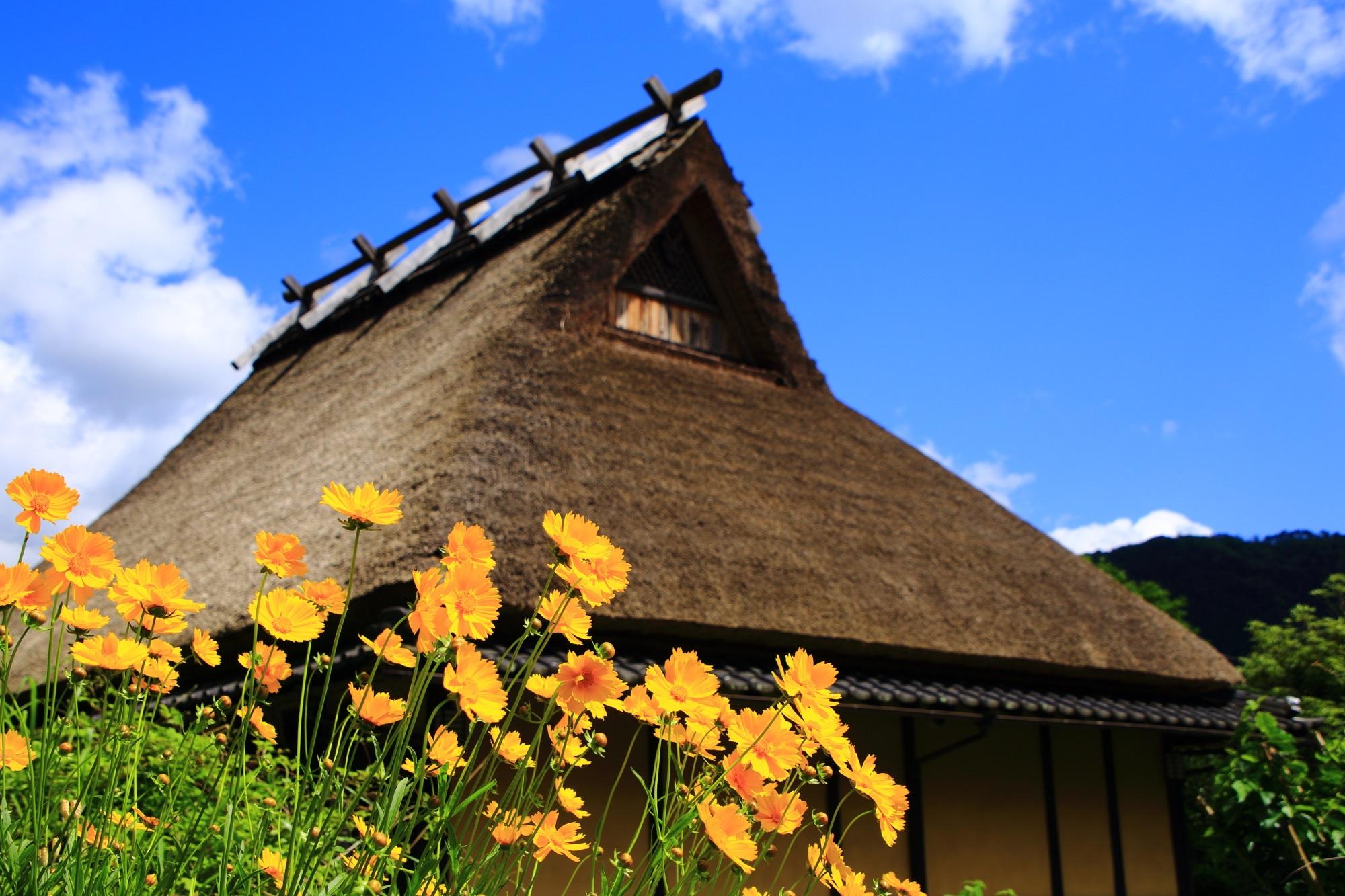 鮮やかな花が良く合うかやぶき屋根