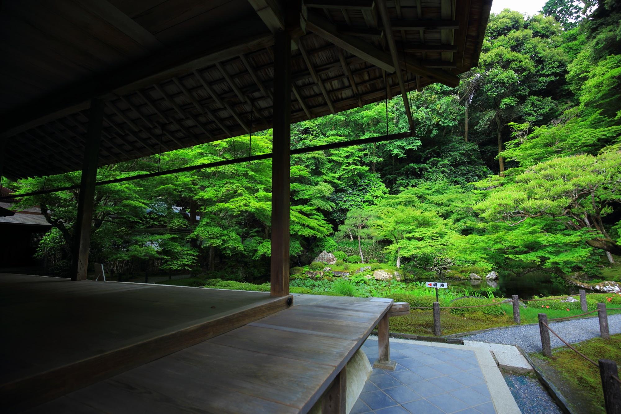 京都南禅院の方丈と美しい青もみじ