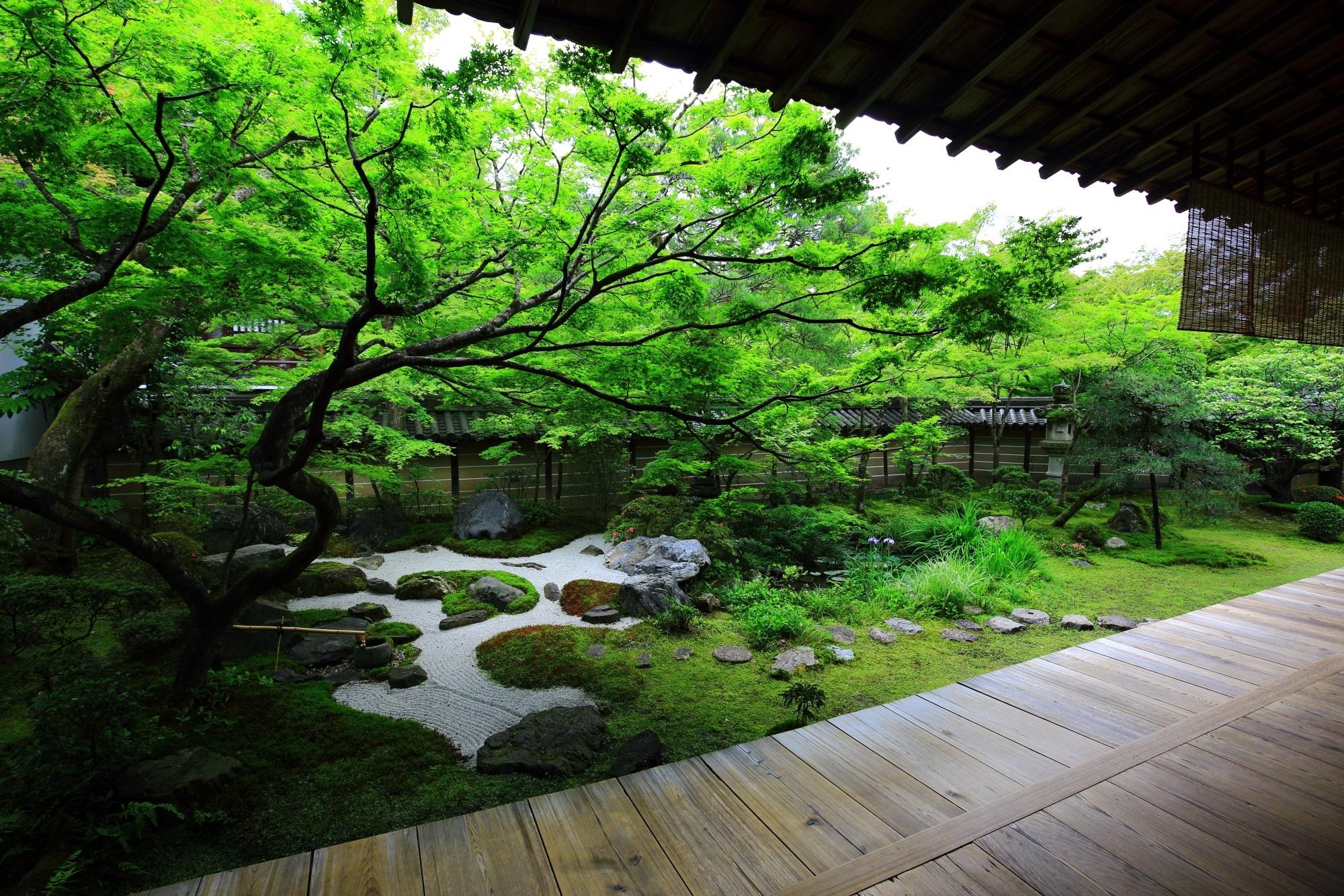 永観堂 方丈庭園 もみじの名所の絶品の緑