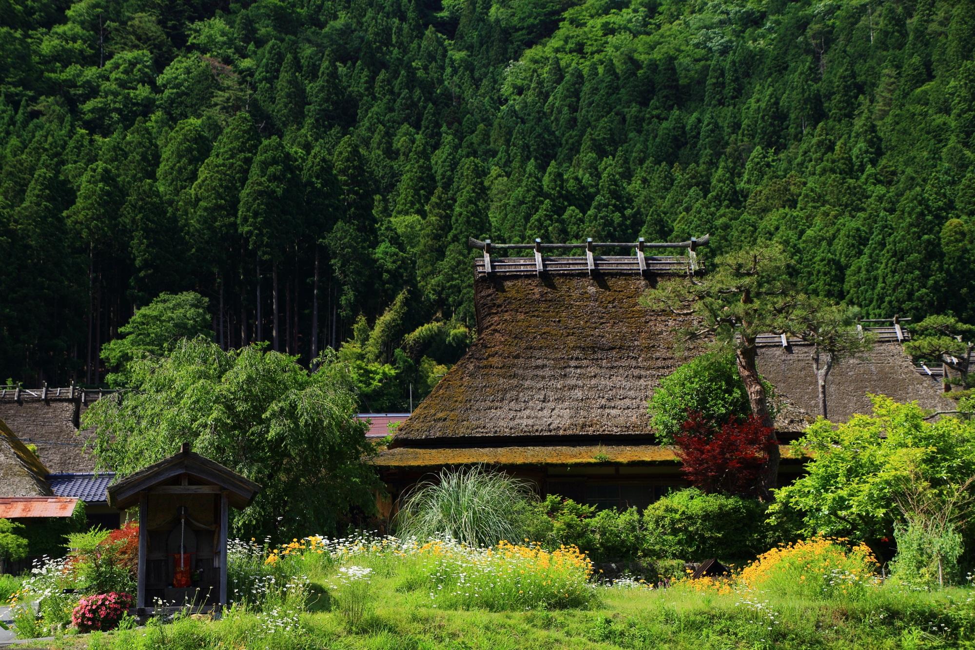 見事な構えの立派なかかやぶき屋根の家と背景の杉の木の山
