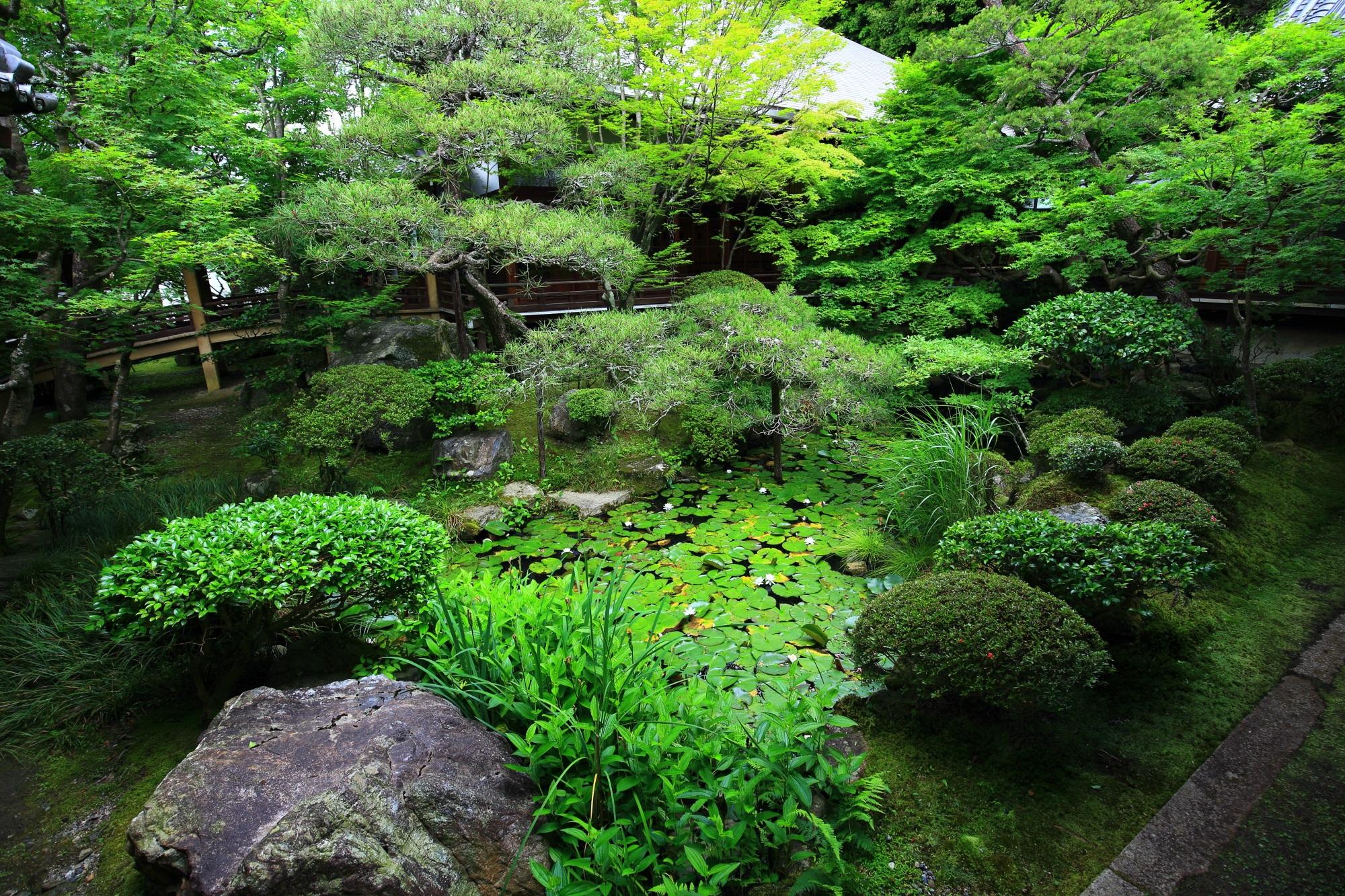 美しい緑につつまれた永観堂の中庭