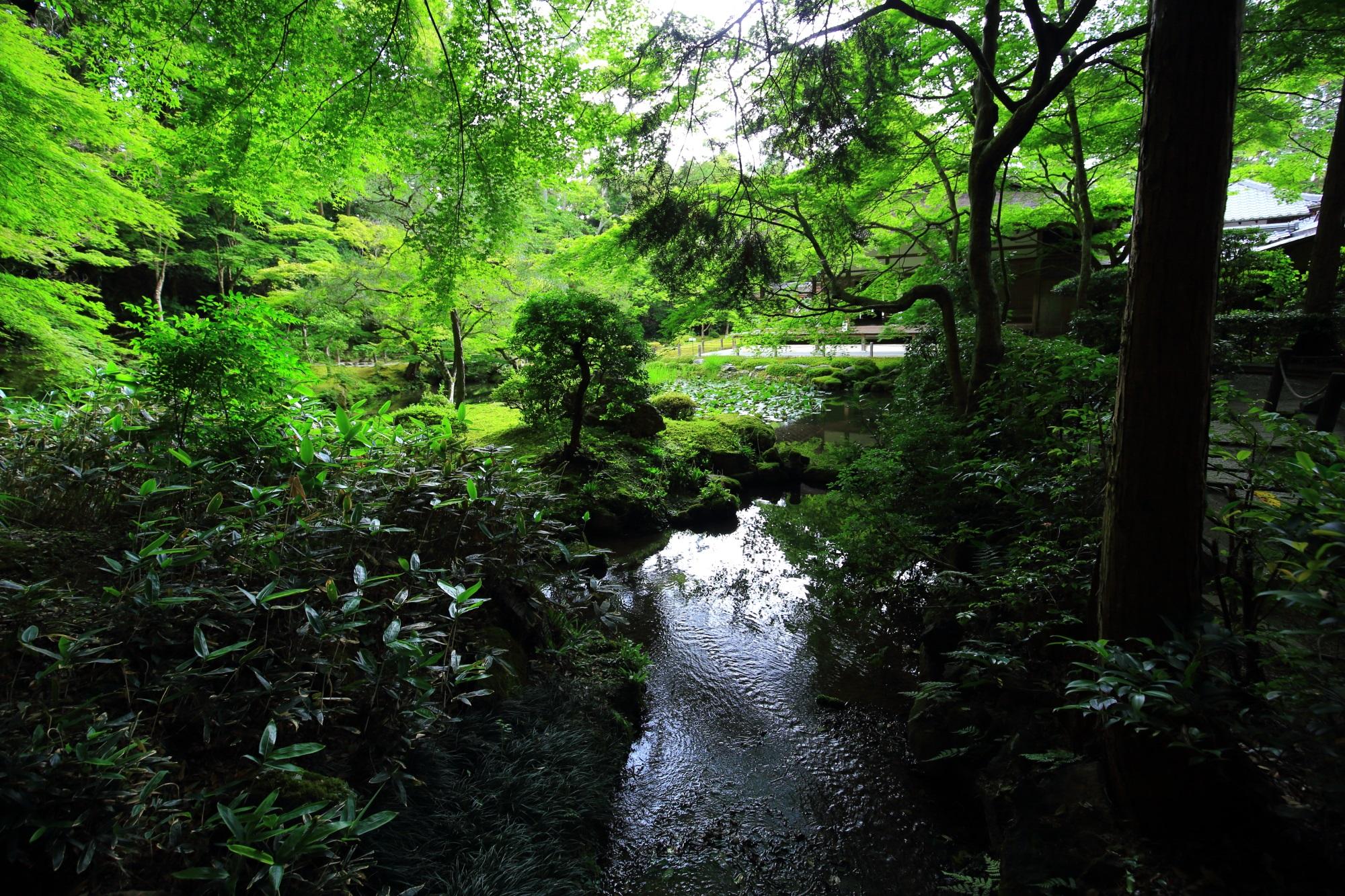 南禅院 池泉回遊式庭園 素晴らしい