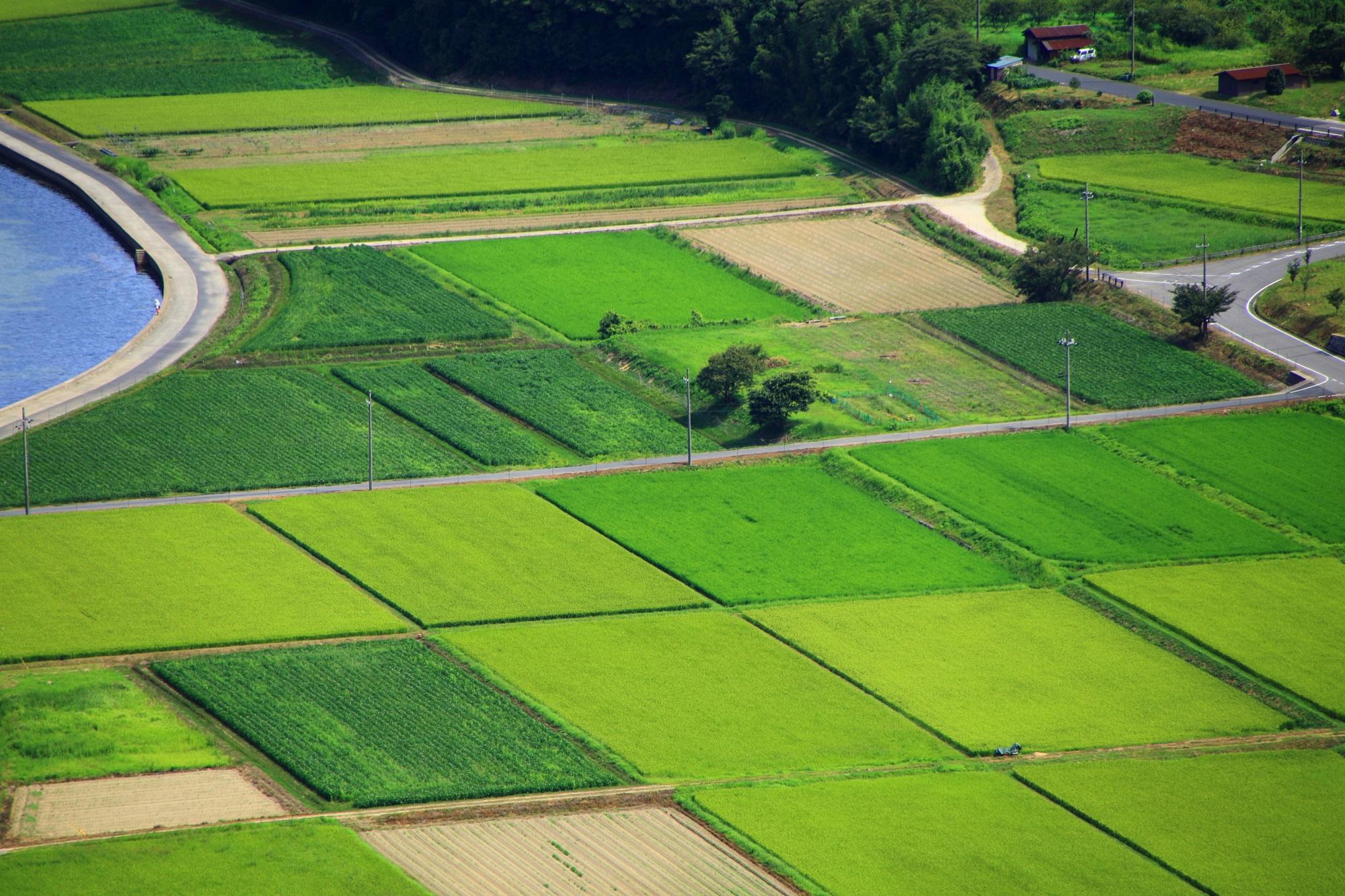 久美浜湾の様々な色合いの緑色をした美しい田んぼ