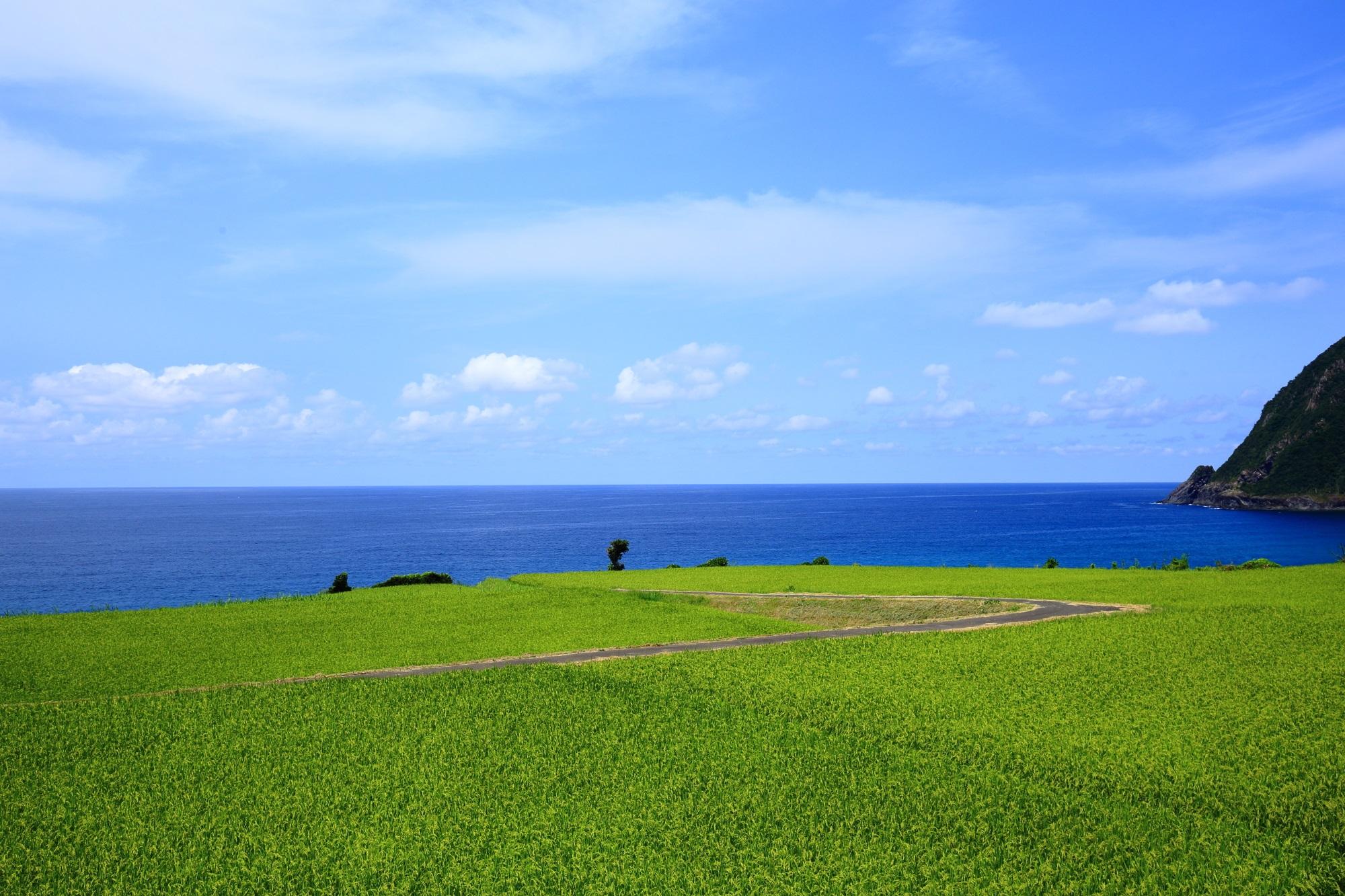 京丹後の屏風岩の辺りから眺める犬ヶ岬と田園