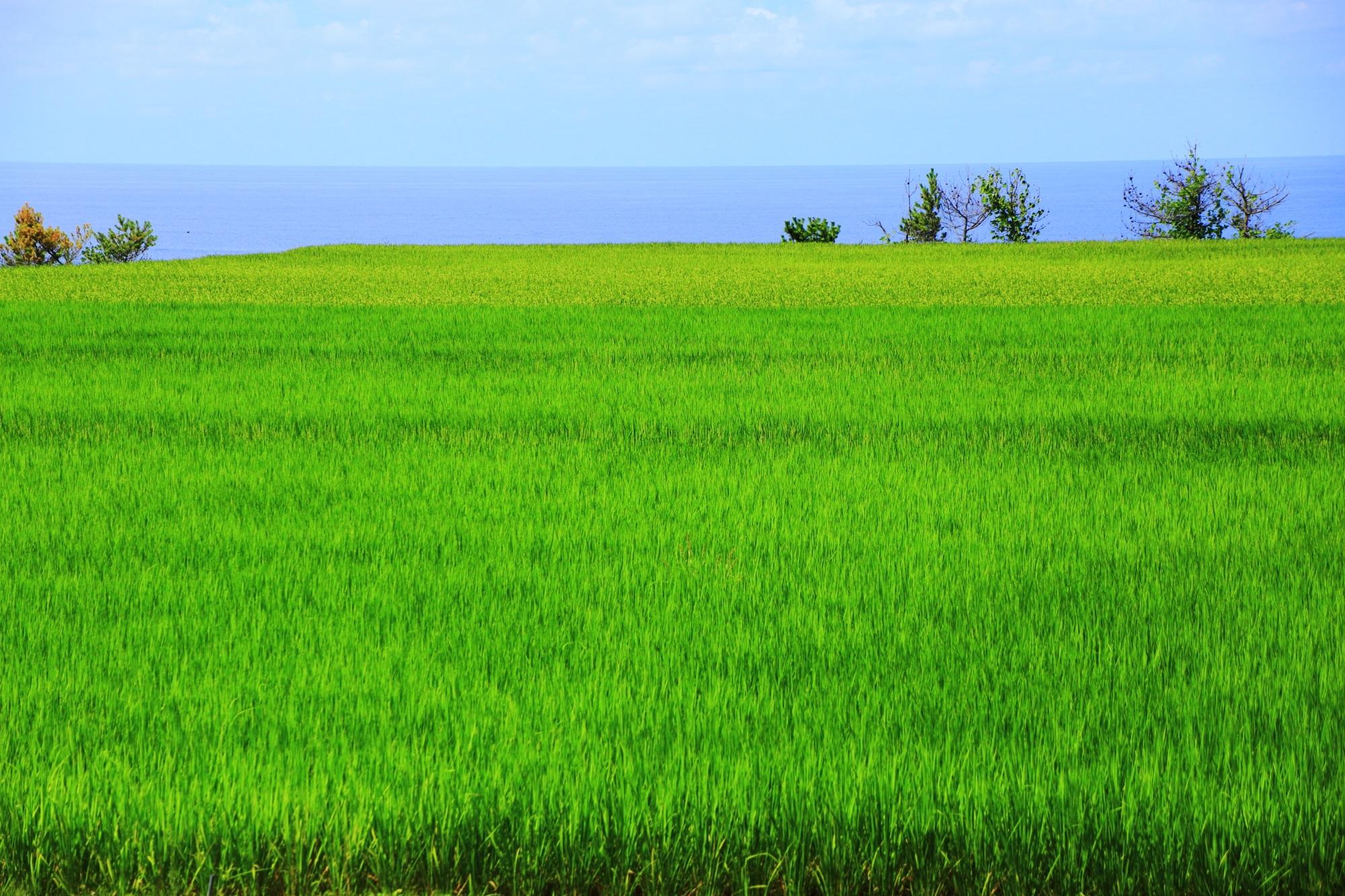 田園の綺麗な緑と日本海の景色