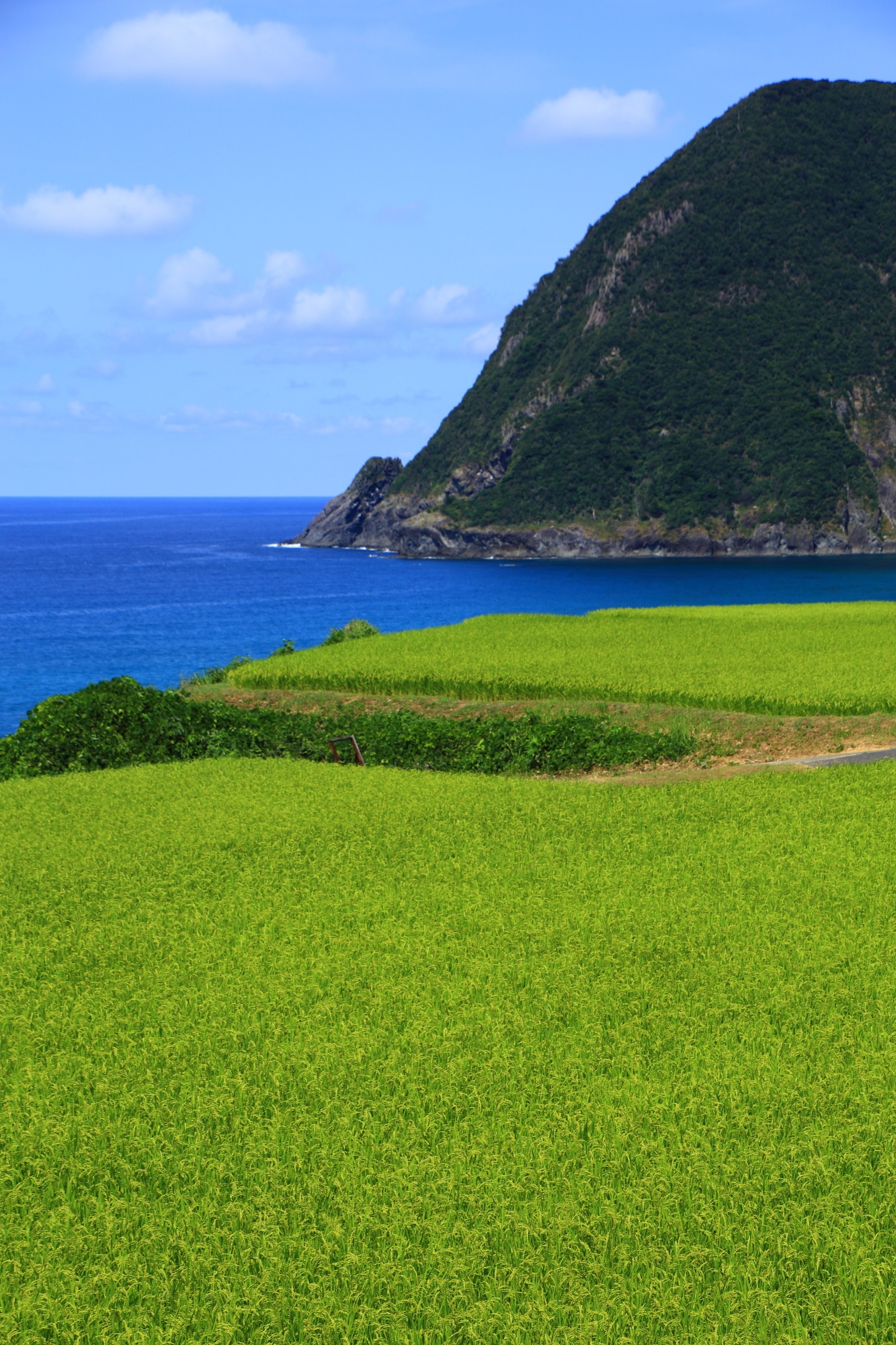 京丹後市の犬ヶ岬の素晴らしい海の青と田んぼの緑のコントラスト