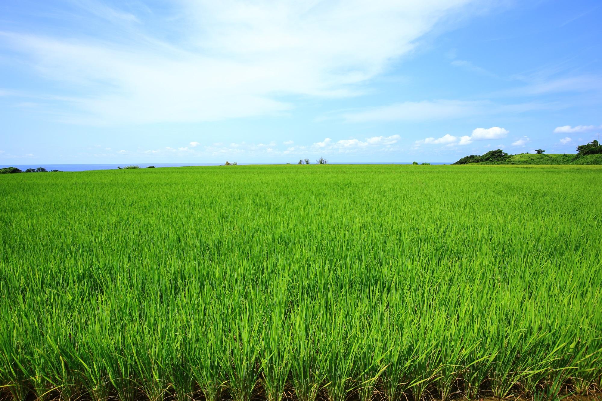 京丹後の海辺の見事な田園