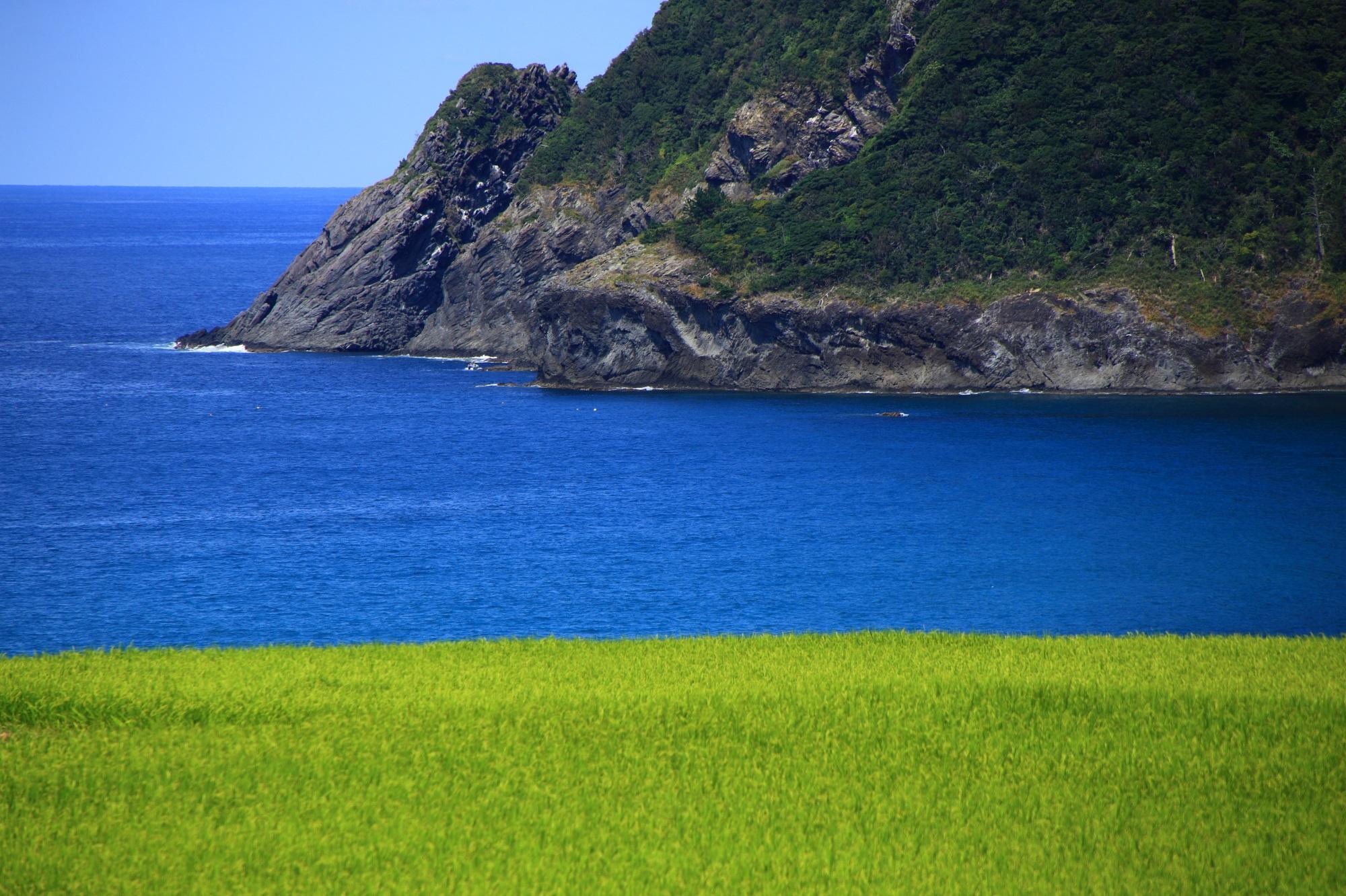 犬ヶ岬と手前の美しい緑の田んぼ