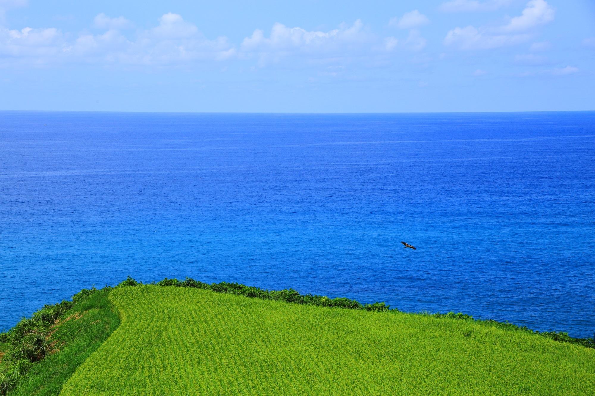 青い海と緑の田んぼの京丹後の絶品の海辺の景色