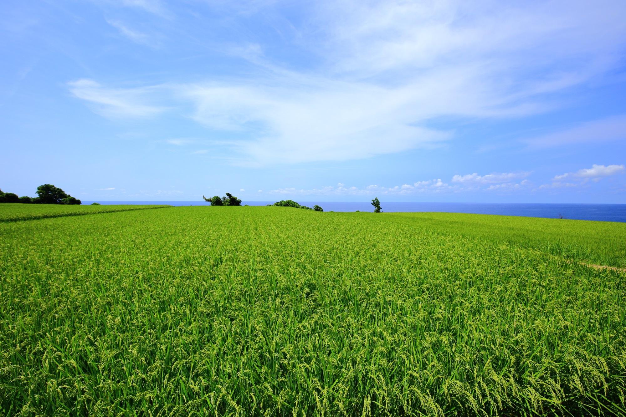 何もないのが素晴らしい京丹後の田園風景