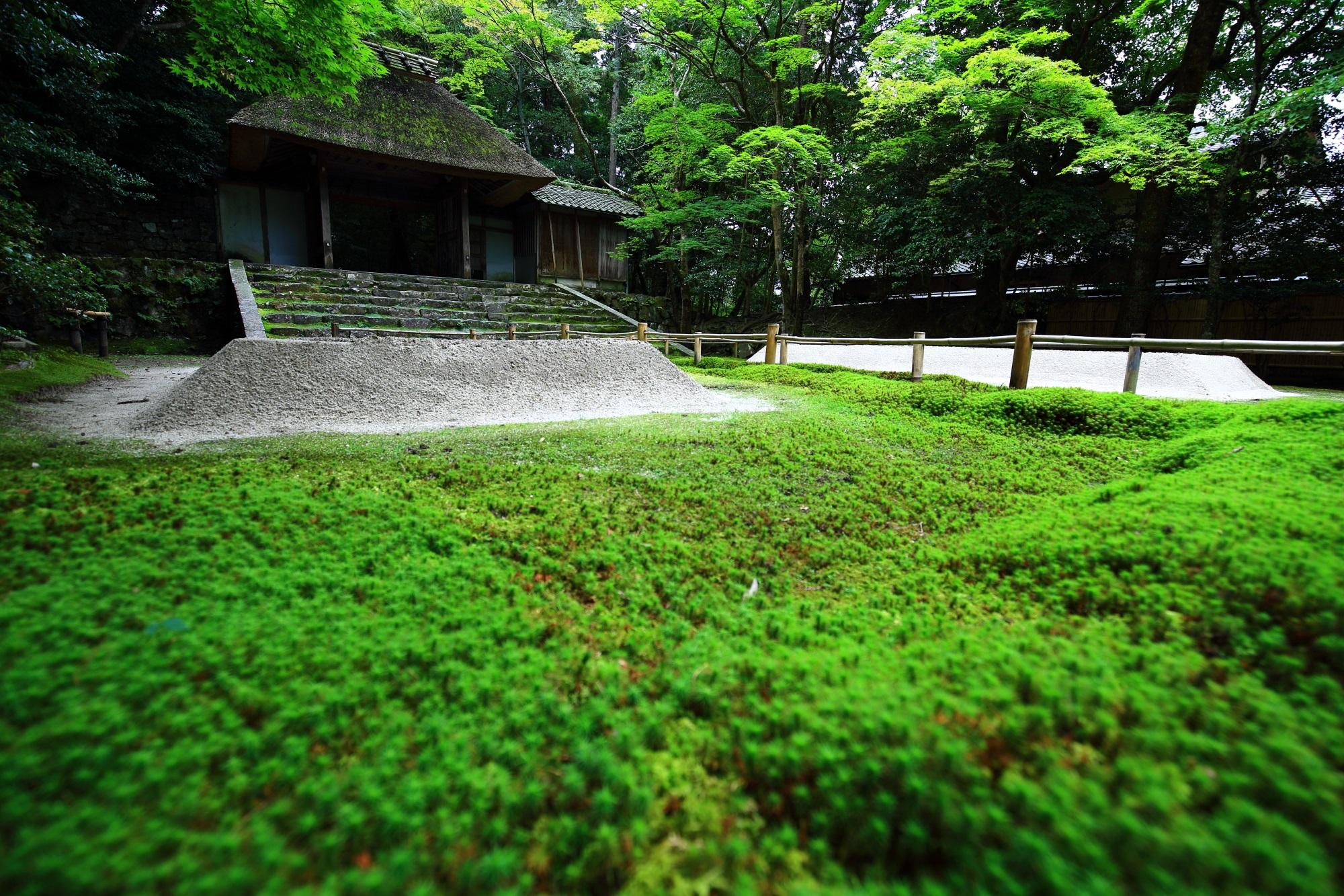 苔 法然院 風情 山門 茅葺屋根
