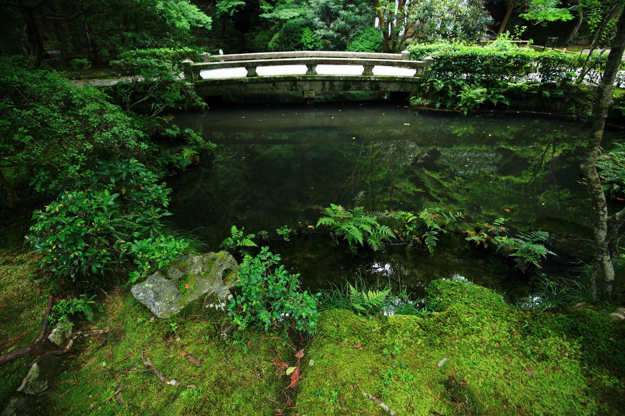 放生池 法然院 苔 風情