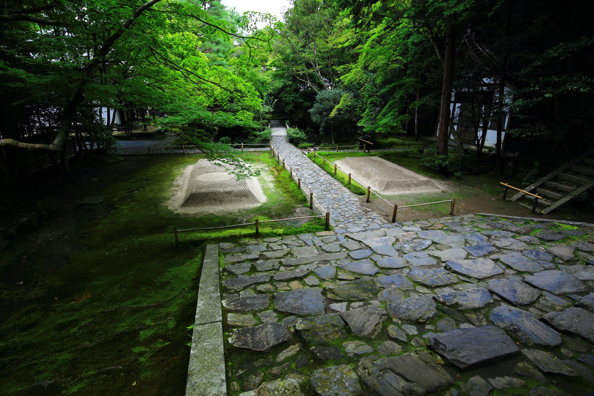 kyoto honen-in tempel bluemaple and moss