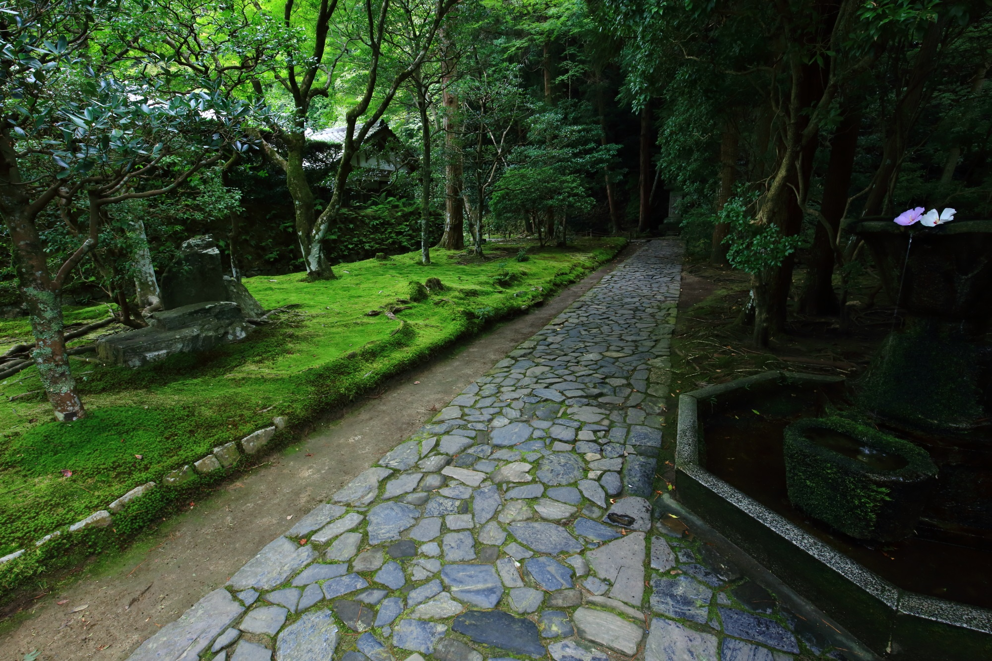 kyoto honen-in temple blue maple and moss
