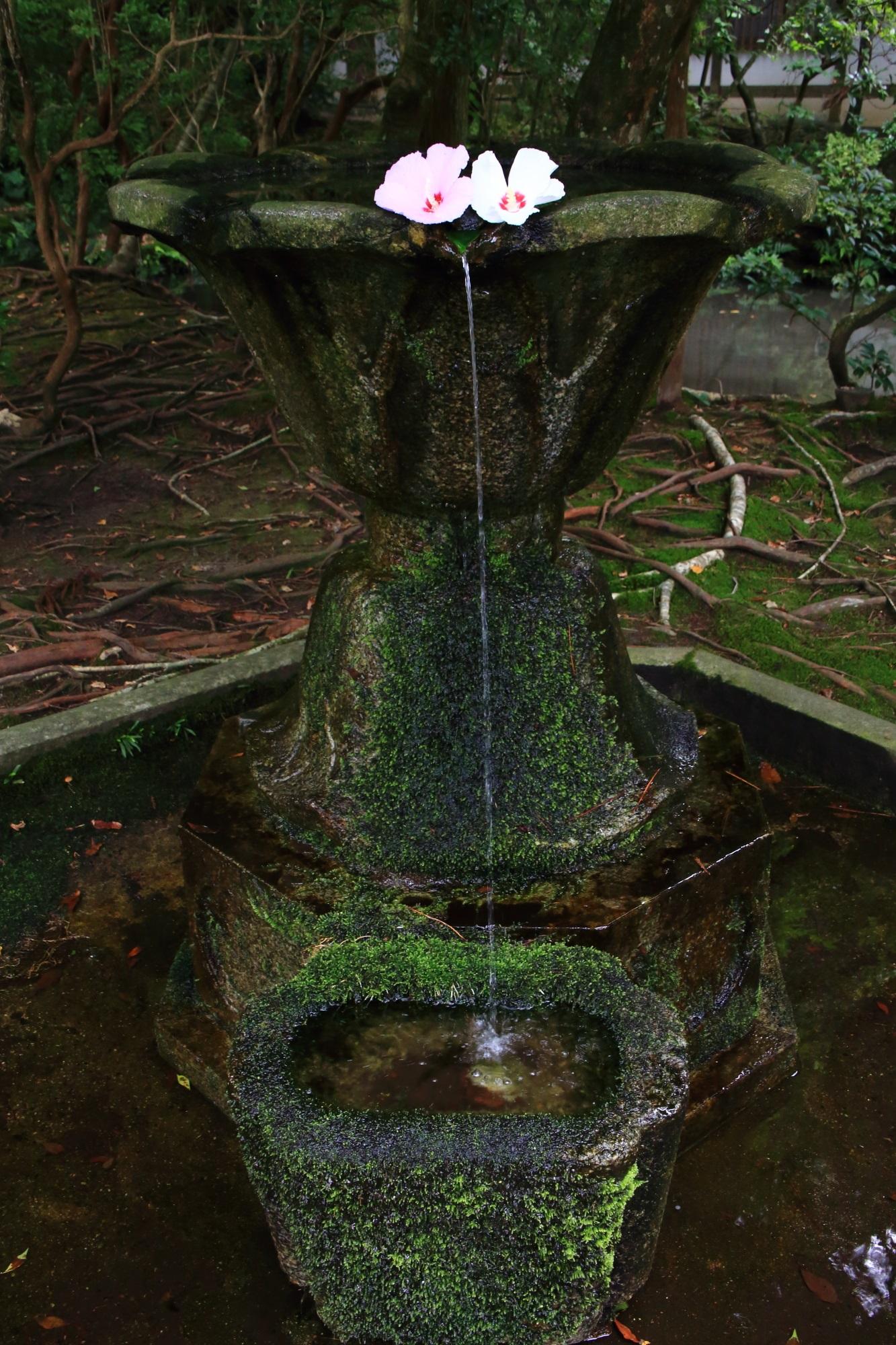 法然院の情緒ある手水鉢と芙蓉の花