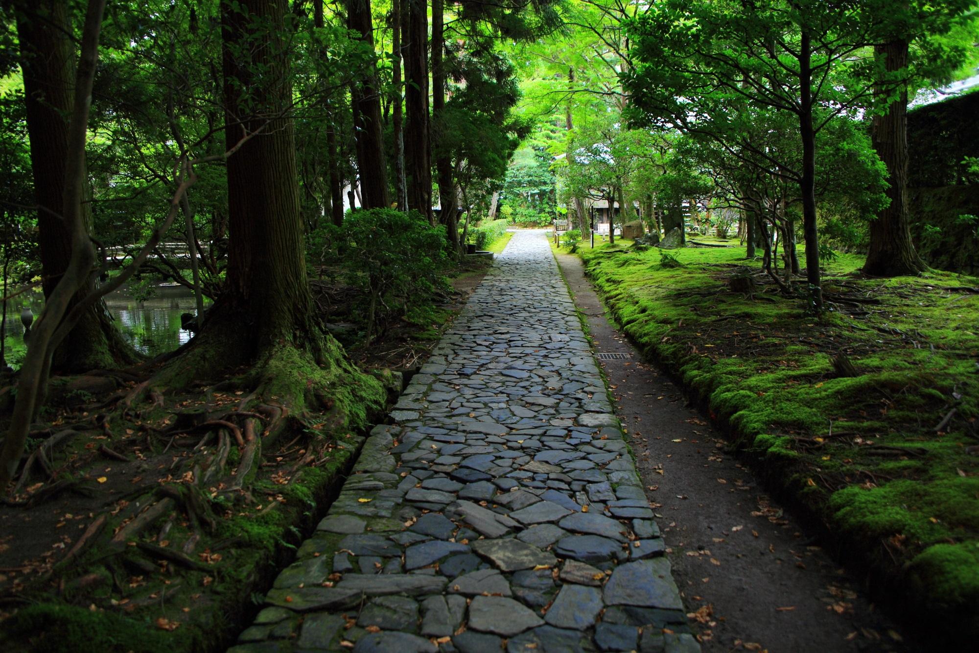法然院の情緒ある参道と苔