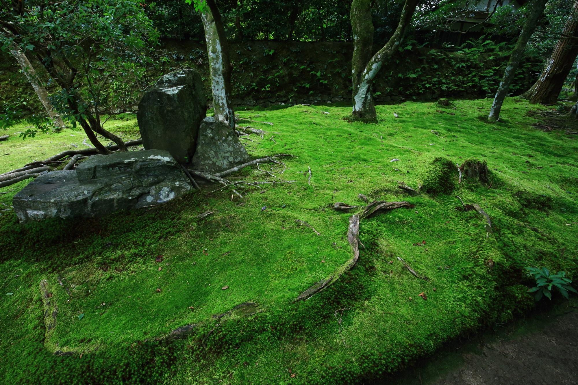 法然院 苔 緑 鮮やか 風情