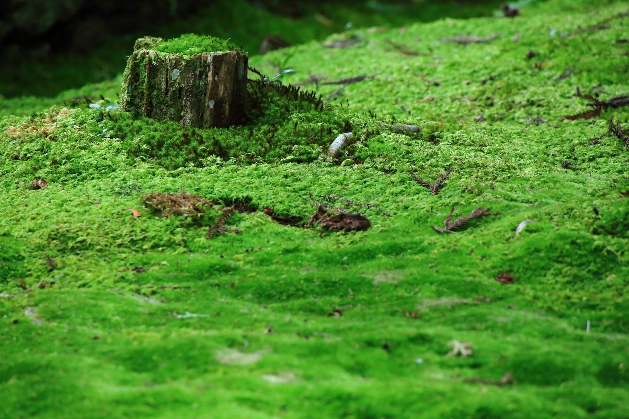 苔 法然院 風情 緑