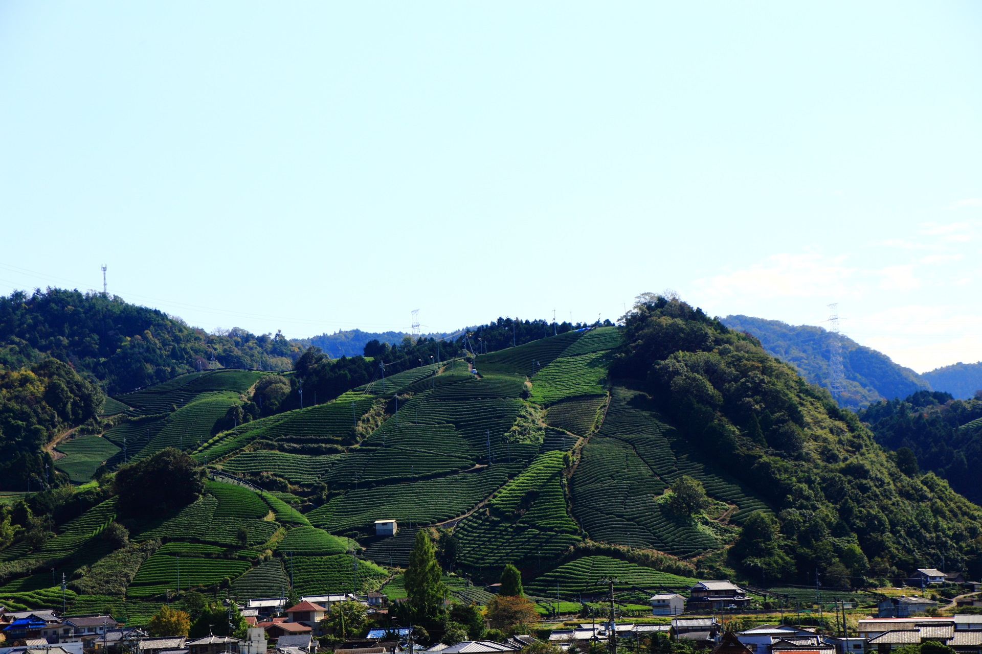 安積親王陵墓の南側の山のお茶畑